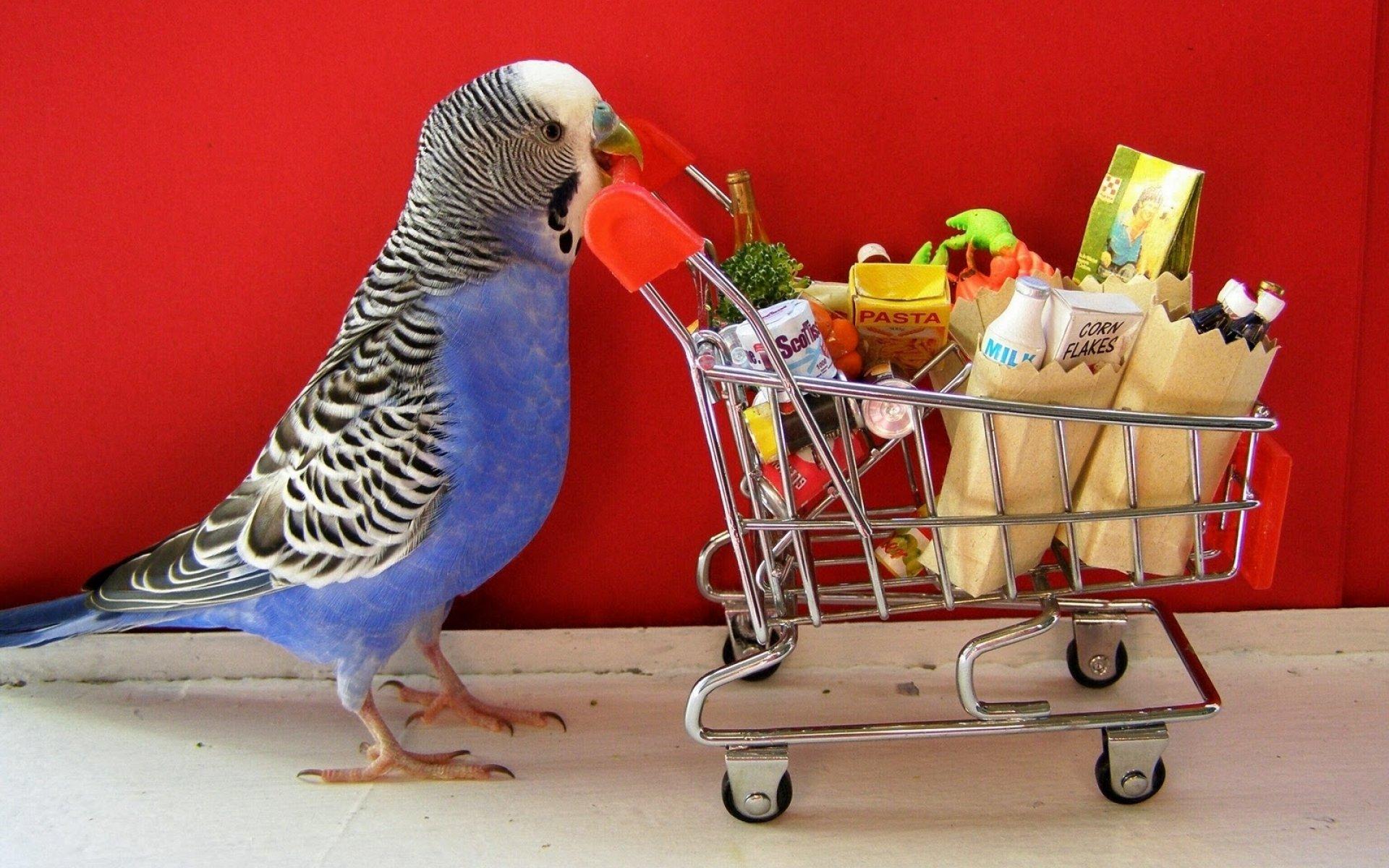 Попугаи прикольные открытки