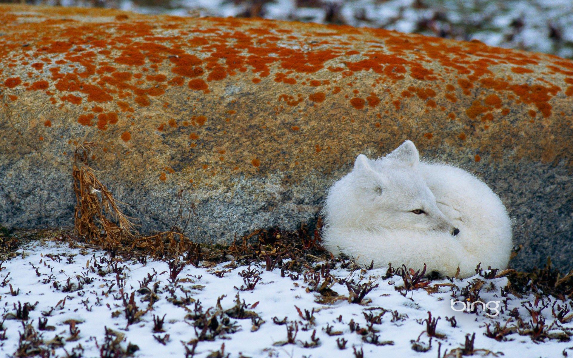 весна животные арктики