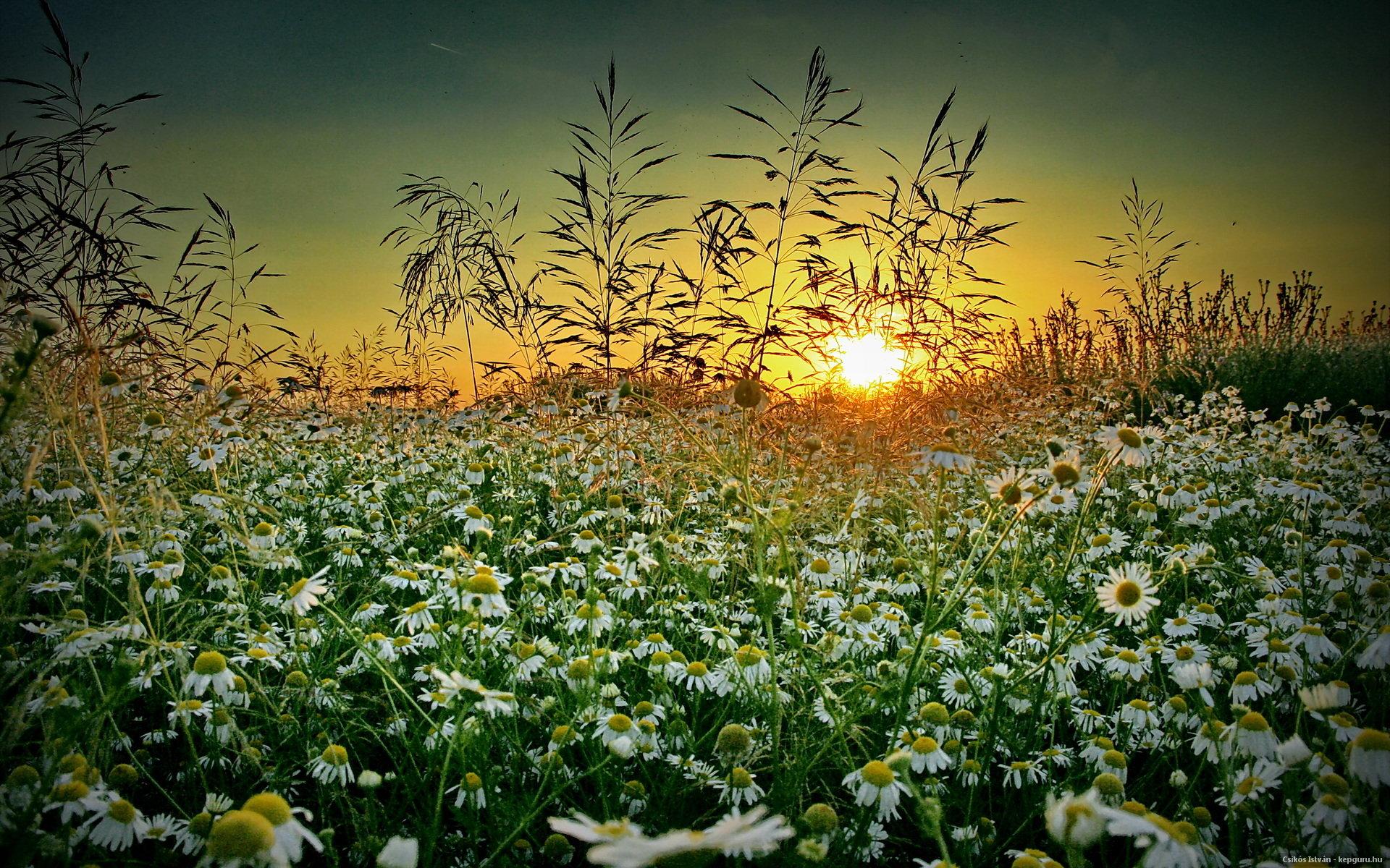 голых картинки с добрым вечером с видом на солнечное поле ромашек ней