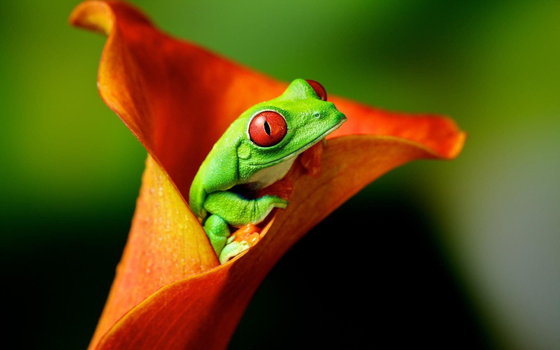 Hintergrundbilder : 1920x1200 px, Amphibien, hell, schließen, Farben ...