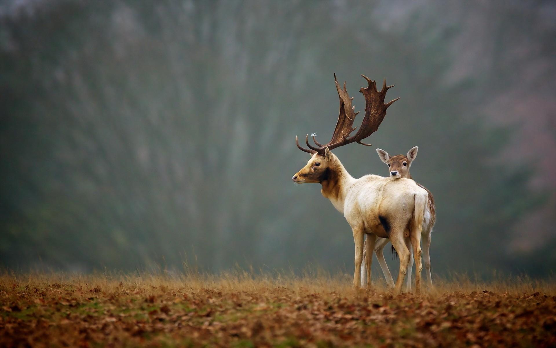 1920x1200 px, animals, antlers, babies ...