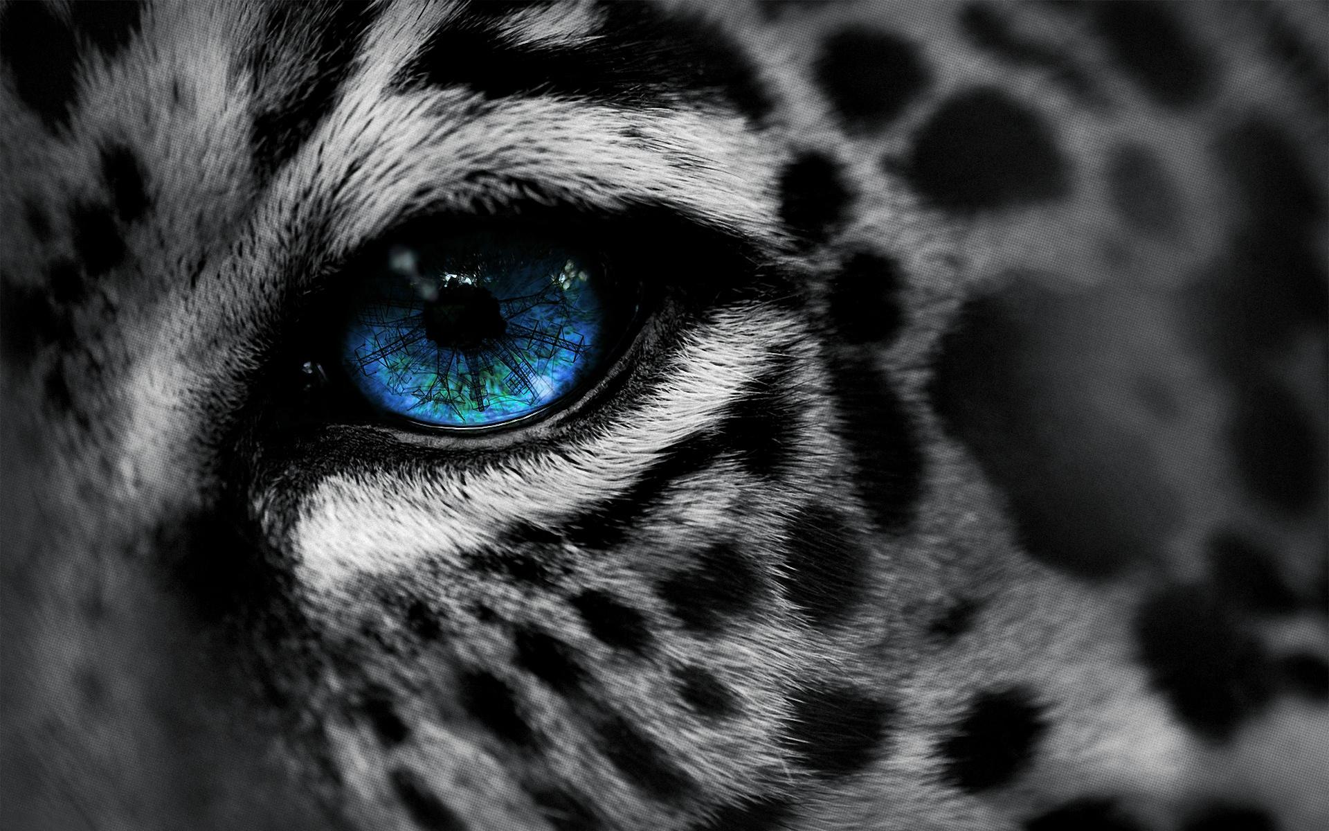 Blue Eyed Cats Leopard Spots