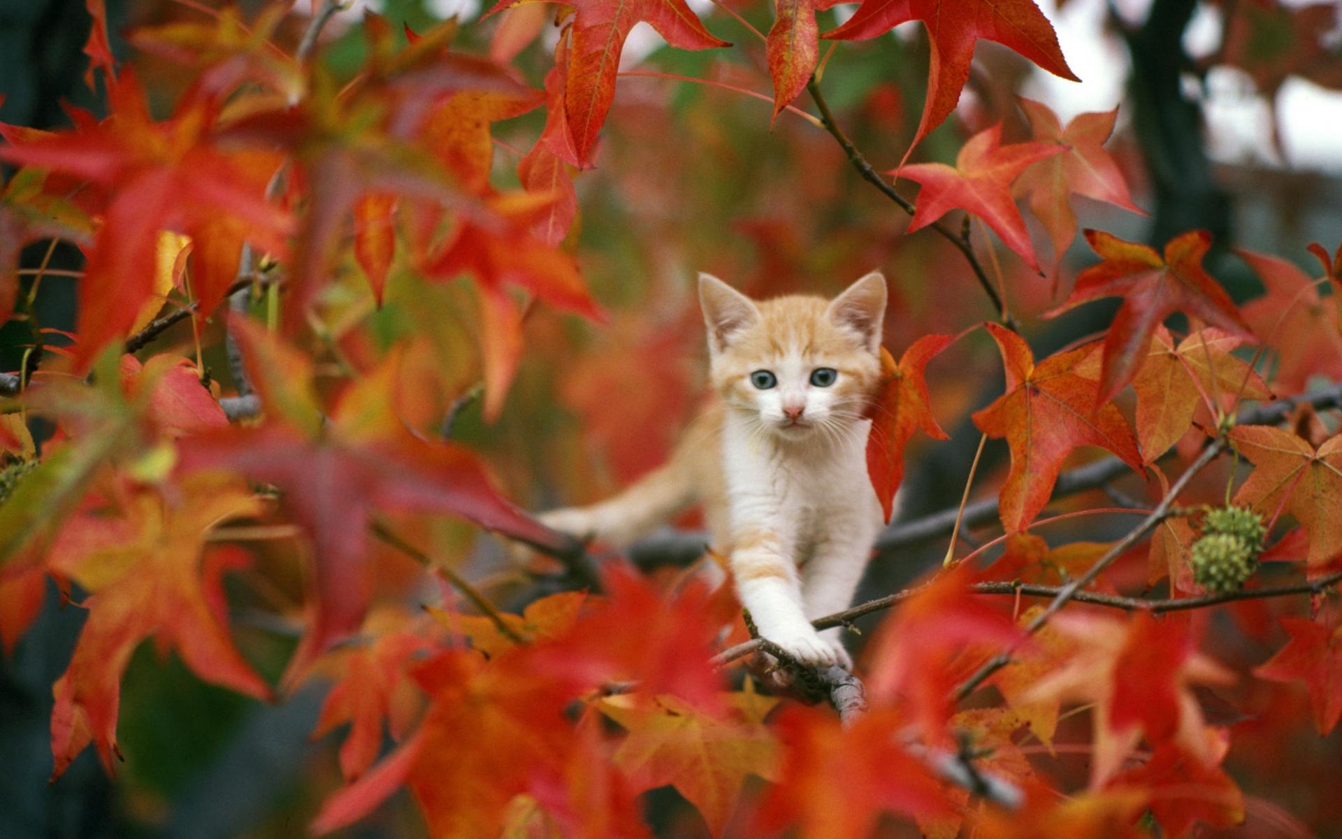 animals, autumn, cats, cute
