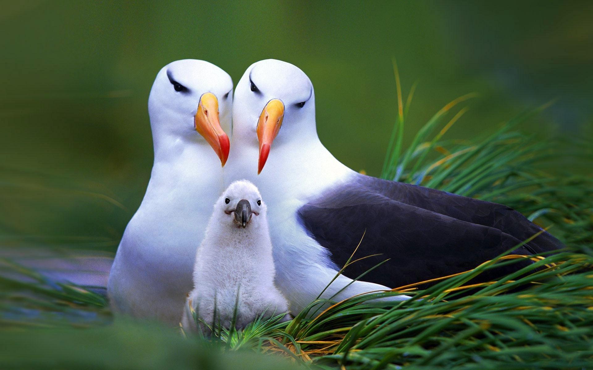 wallpaper : 1920x1200 px, baby animals, birds, seagulls 1920x1200