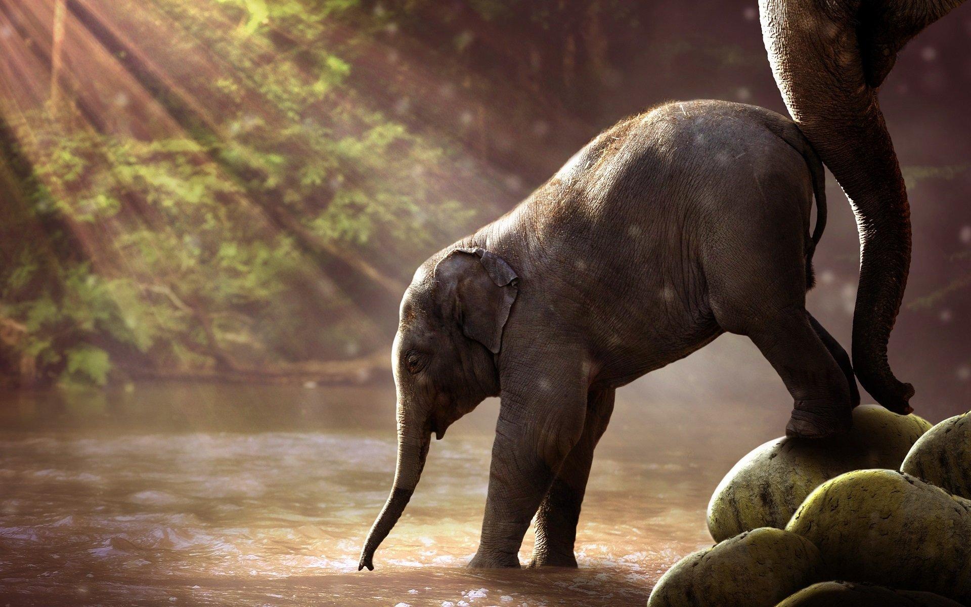 Fond D Ecran 1920 X 1200 Px Des Bebes Animaux Elephant