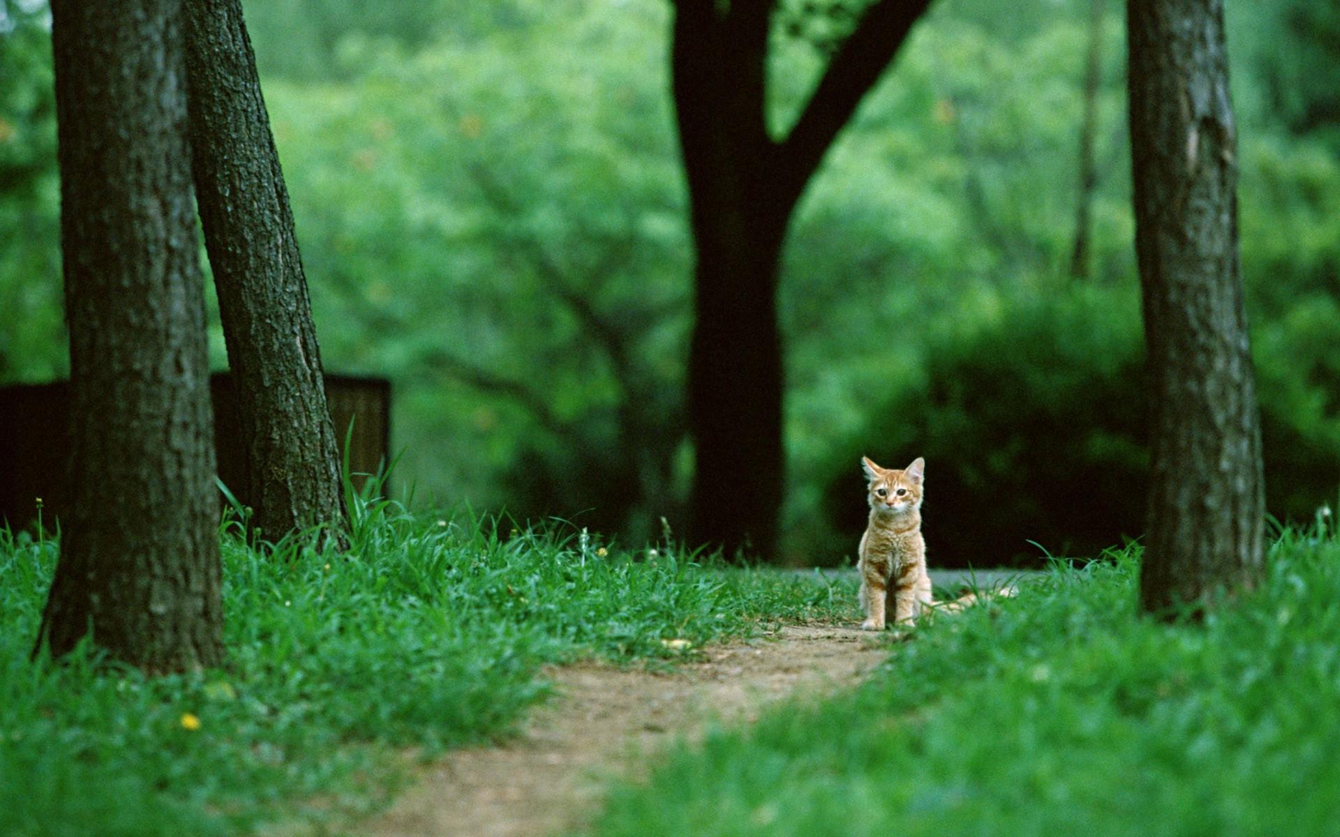1920x1200 Px Animals Cats Feline Grass Green Nature Park Trees