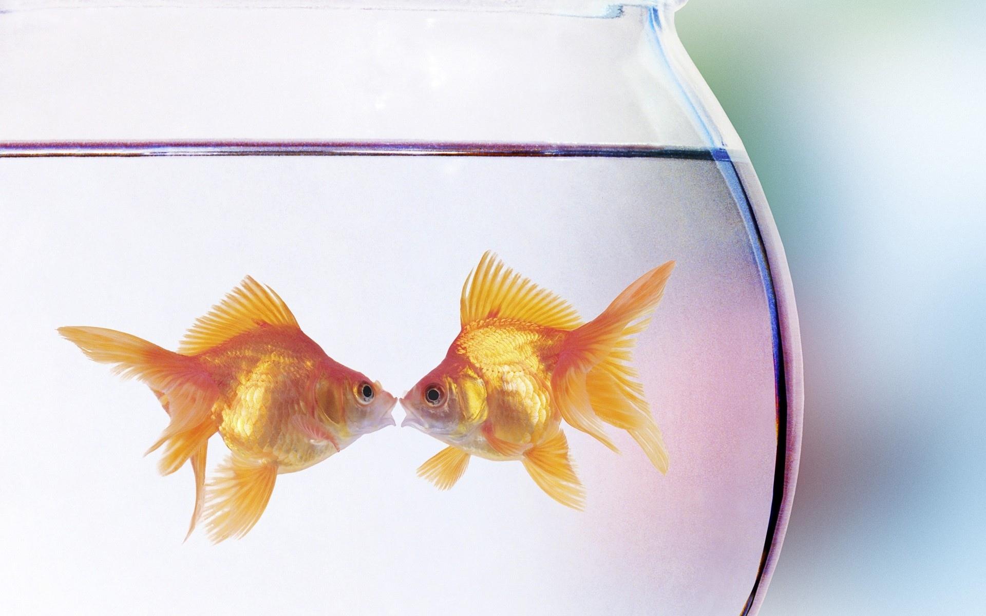 Сделать открытку, рыбка в аквариуме открытка