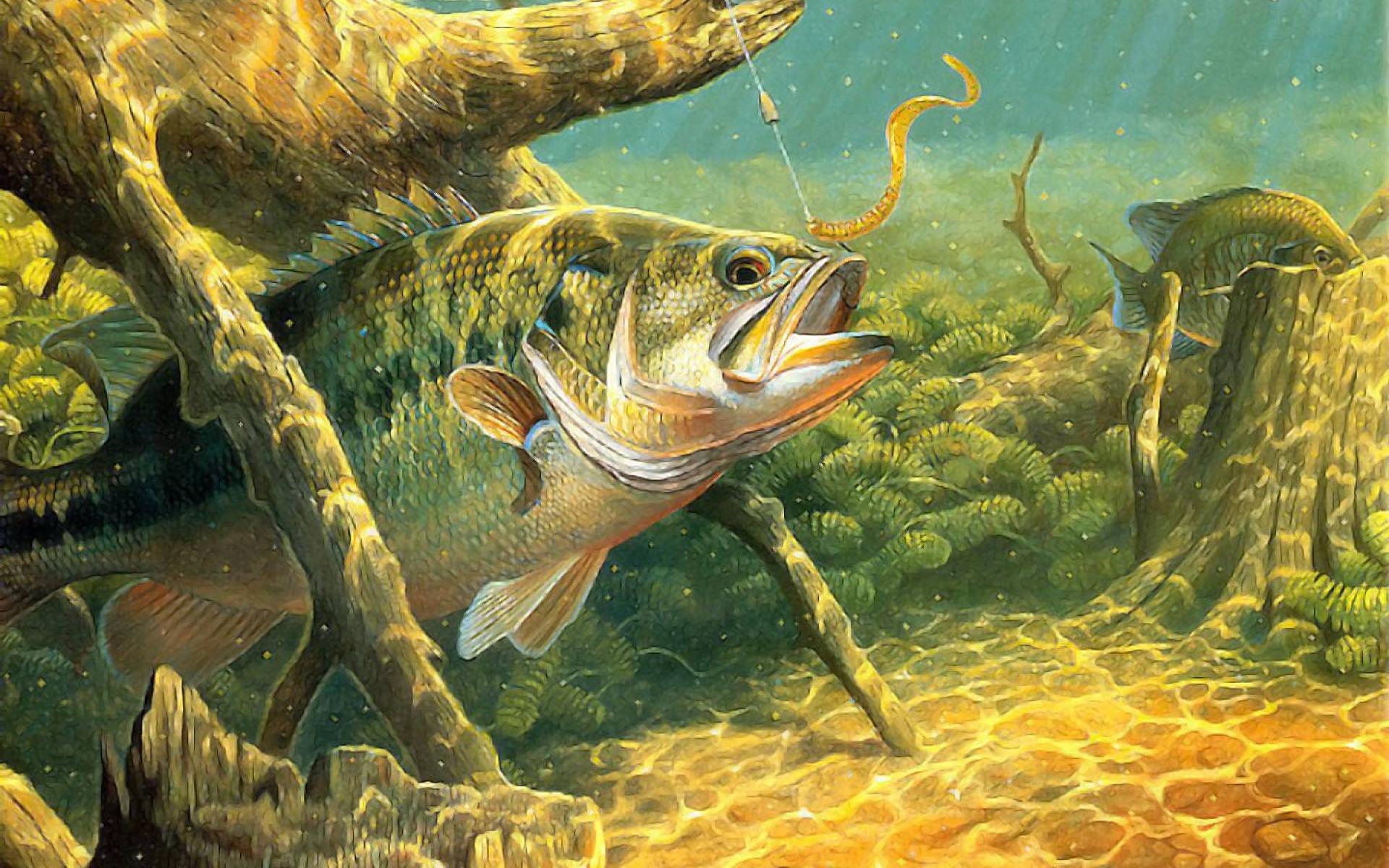 Картинка рыбалка фоновая