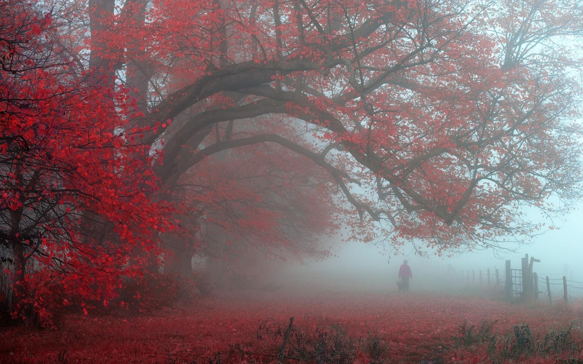 маленьким окошкам, красивые фото пейзаж сад в тумане стремилась поглотить