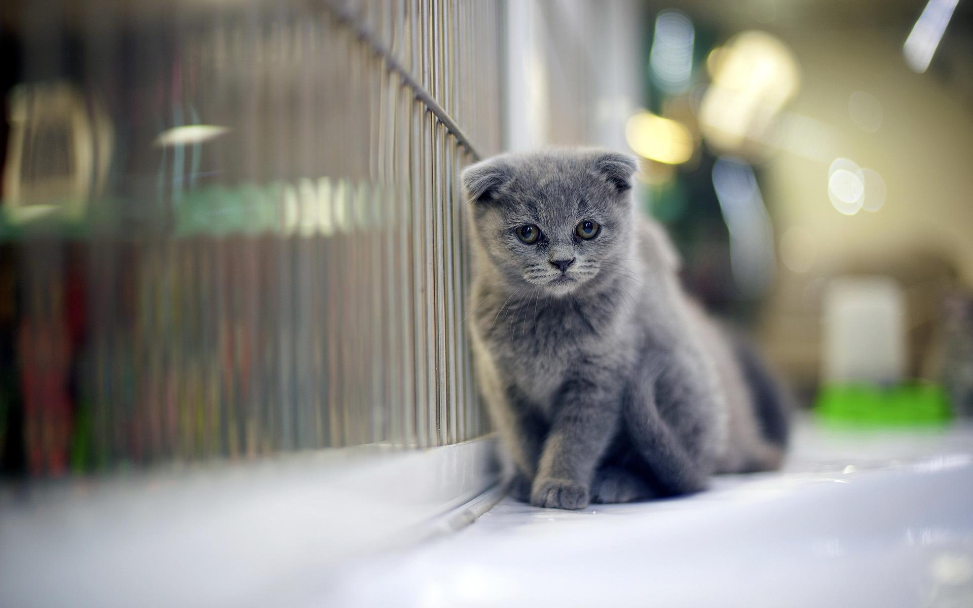 Wallpaper 1920x1200 Px Babies Baby Cat Cats Cute Eyes Kitten Kittens Pov 1920x1200 4kwallpaper 1640685 Hd Wallpapers Wallhere