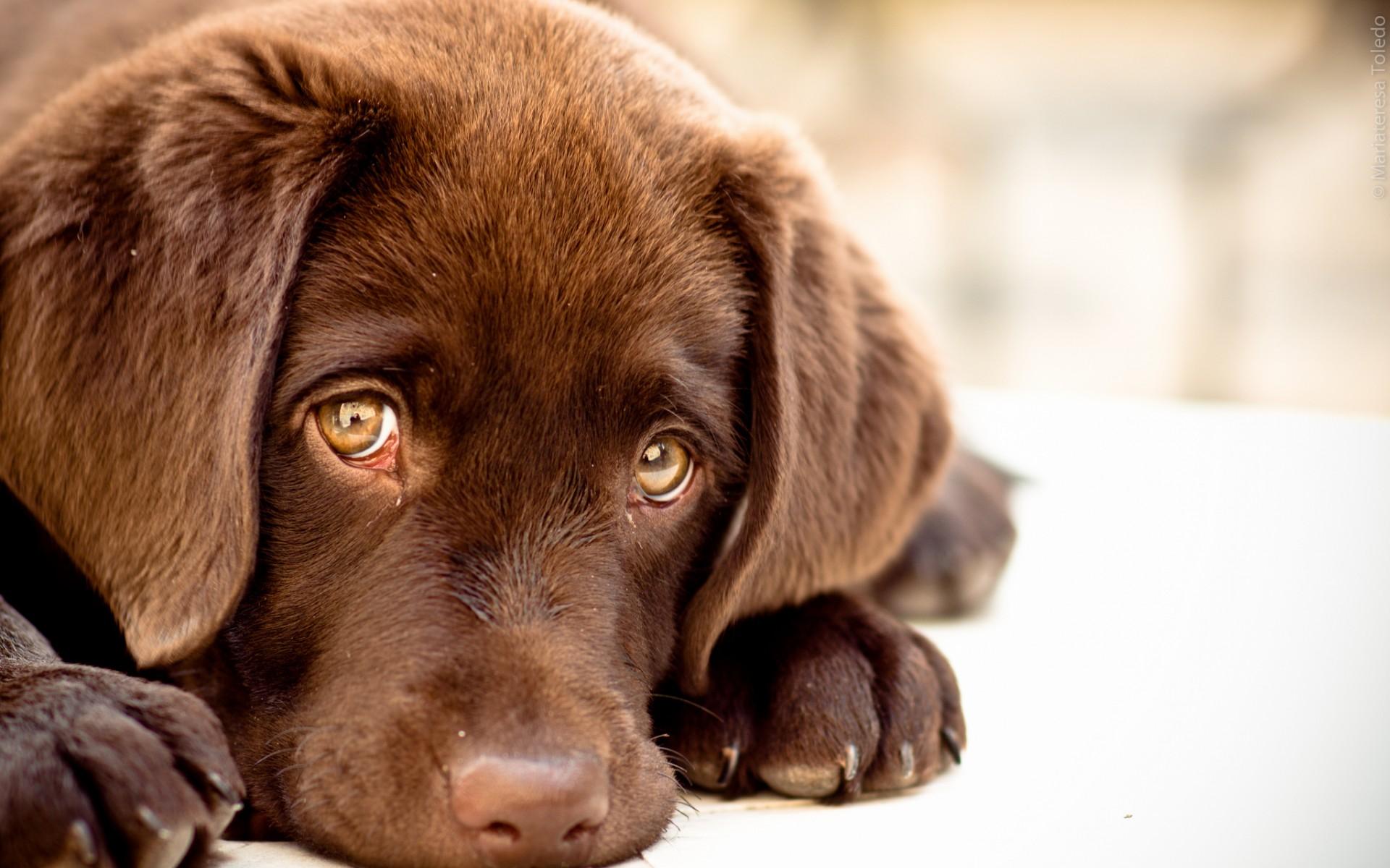грустная картинка щенка алгоритм