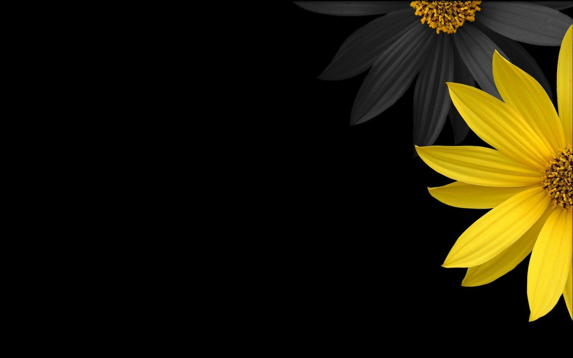 1920x1200 px background black flower minimalistic petals yellow 1530309