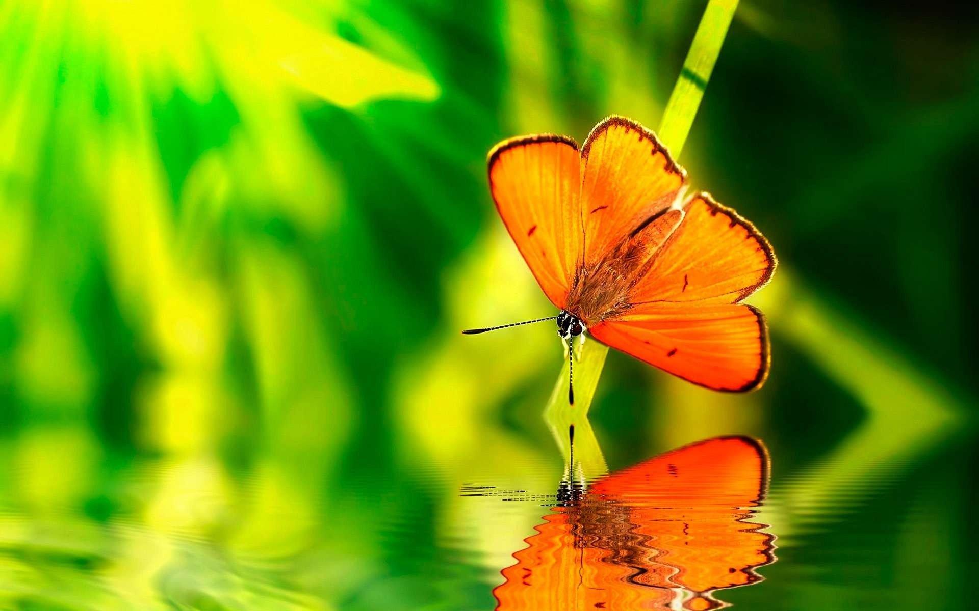 Фото майбах на природе цвет