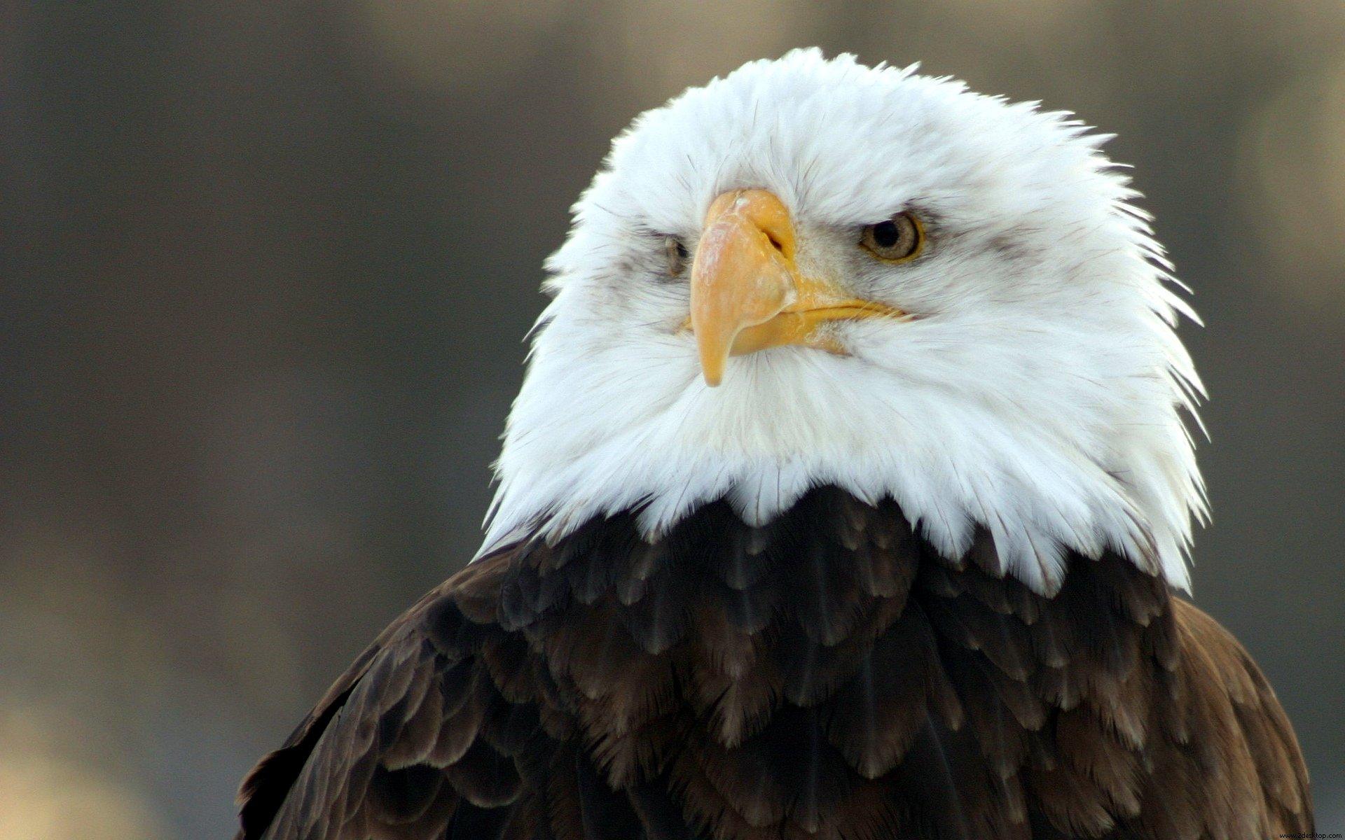 картинки на аву орел это