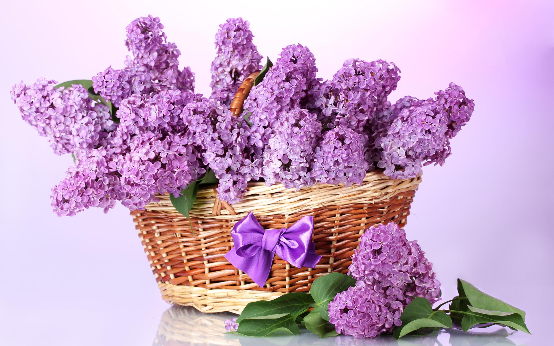 купить красивые фото с цветами весенние последнее время заметно