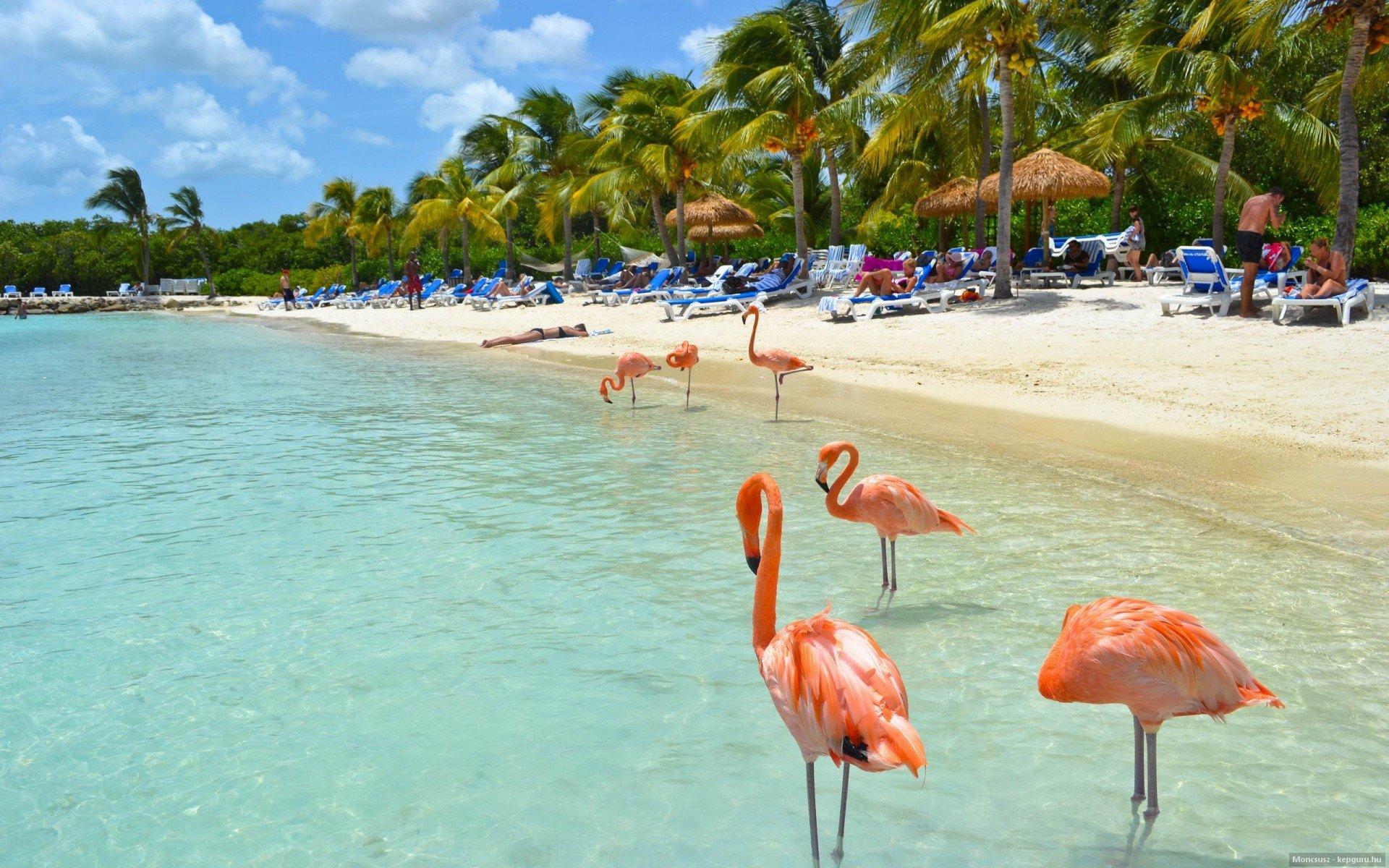 Wallpaper 1920x1200 Px Pantai Burung Burung Flamingo Pulau