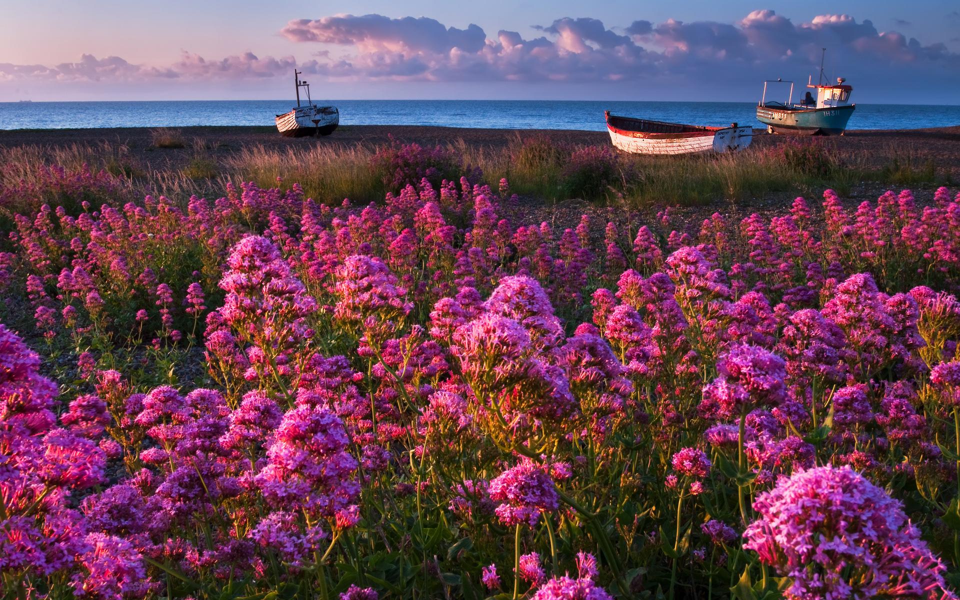 природа яркий фото лето кадре
