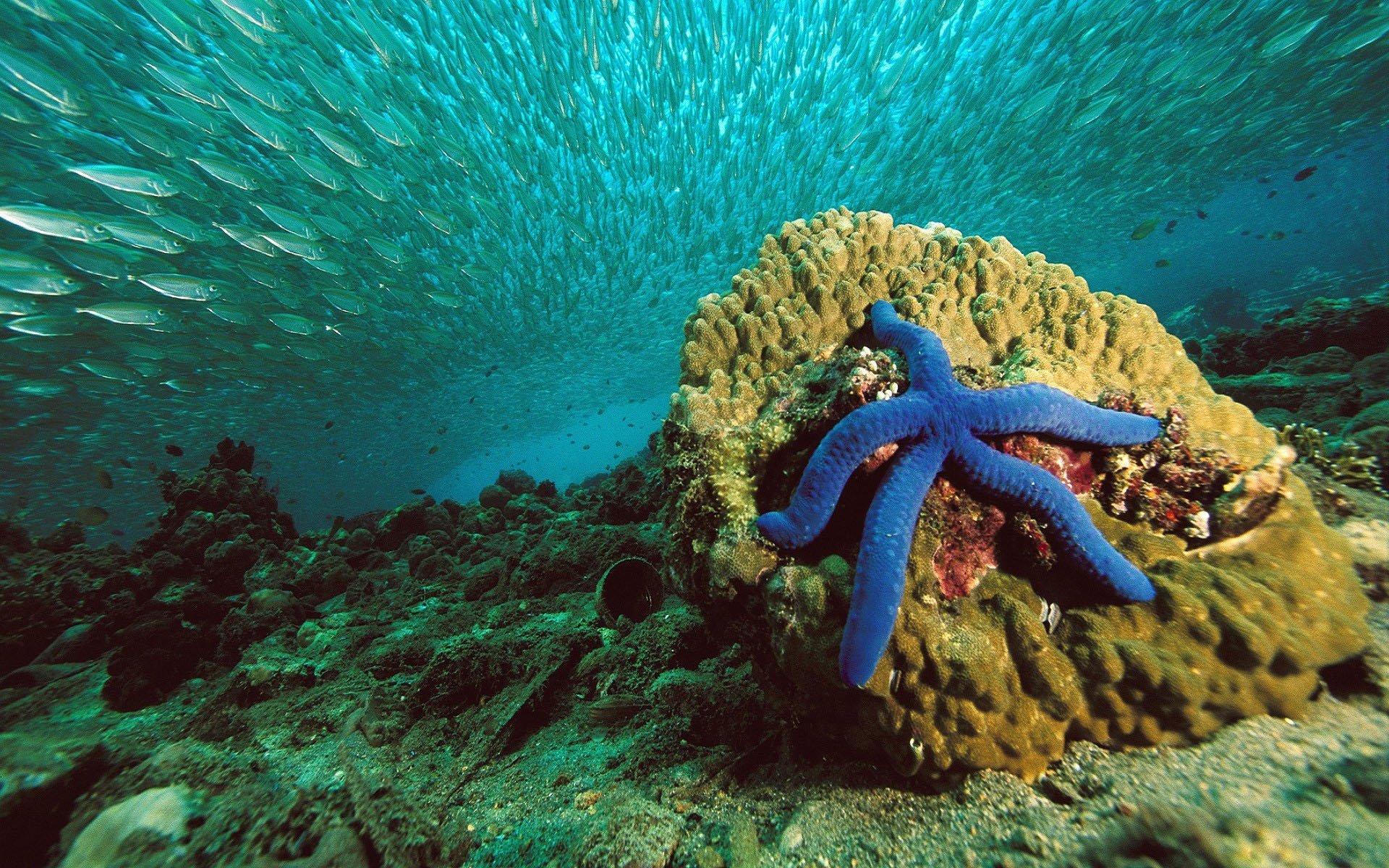 Картинки пейзажи животные морей и океанов