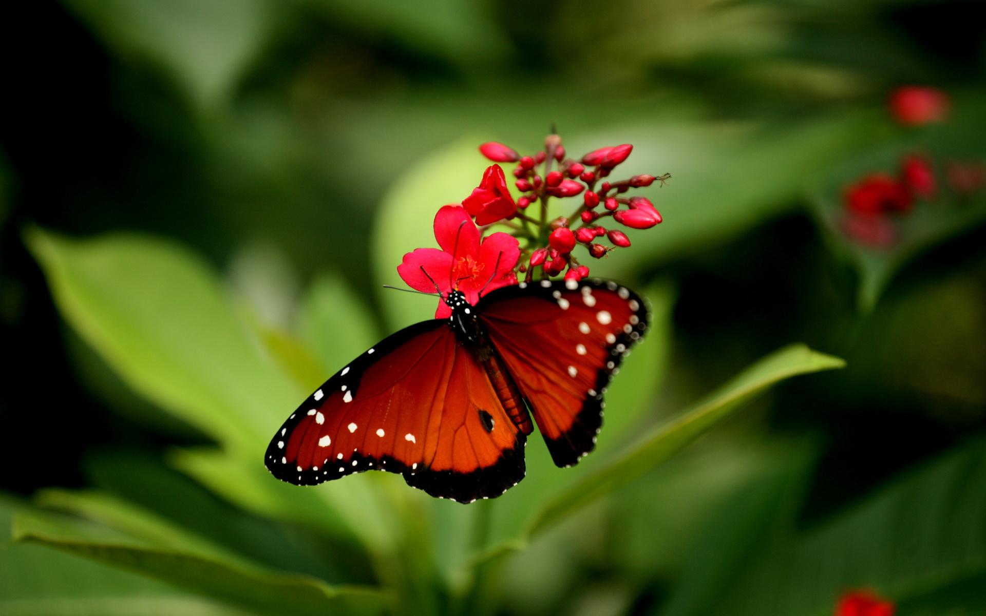 Картинки бабочки на цветке красивые