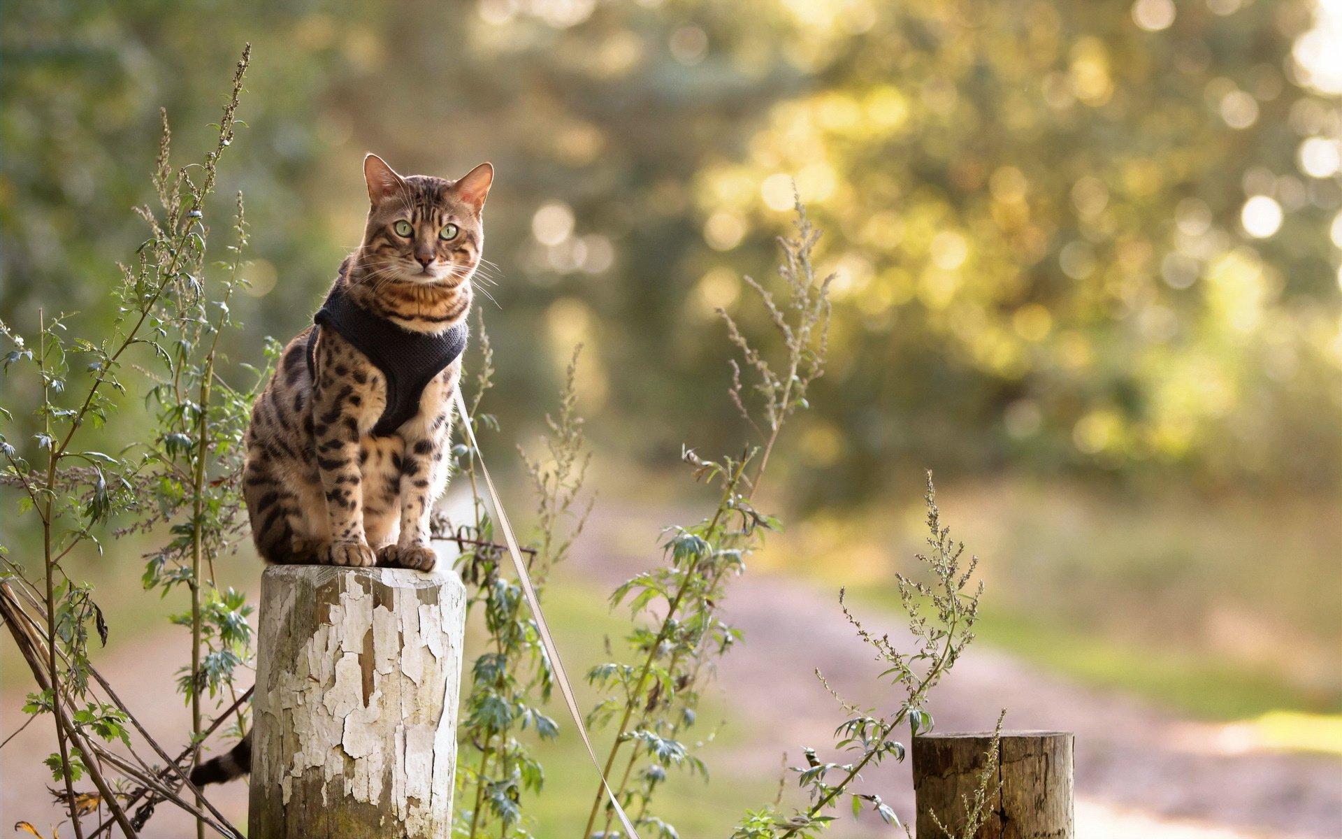хотите картинки высокого разрешения котик на плече сидит семь