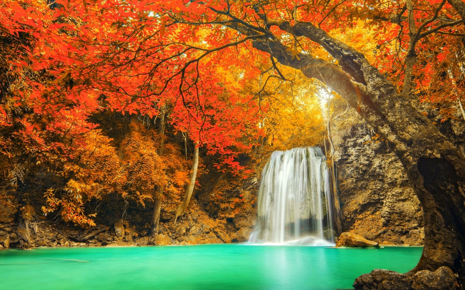 デスクトップ壁紙 1920x1200 Px カラフル 秋 風景 自然 赤