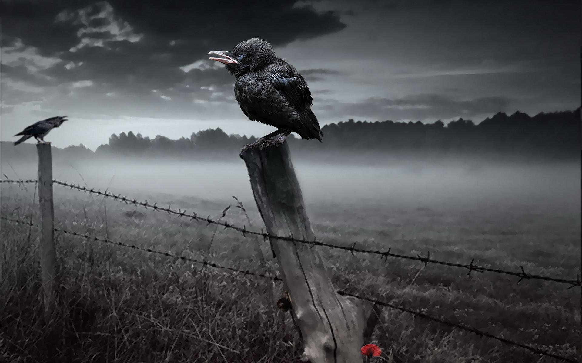 Wallpaper 1920x1200 Px Dark Death Fence Fog Gothic