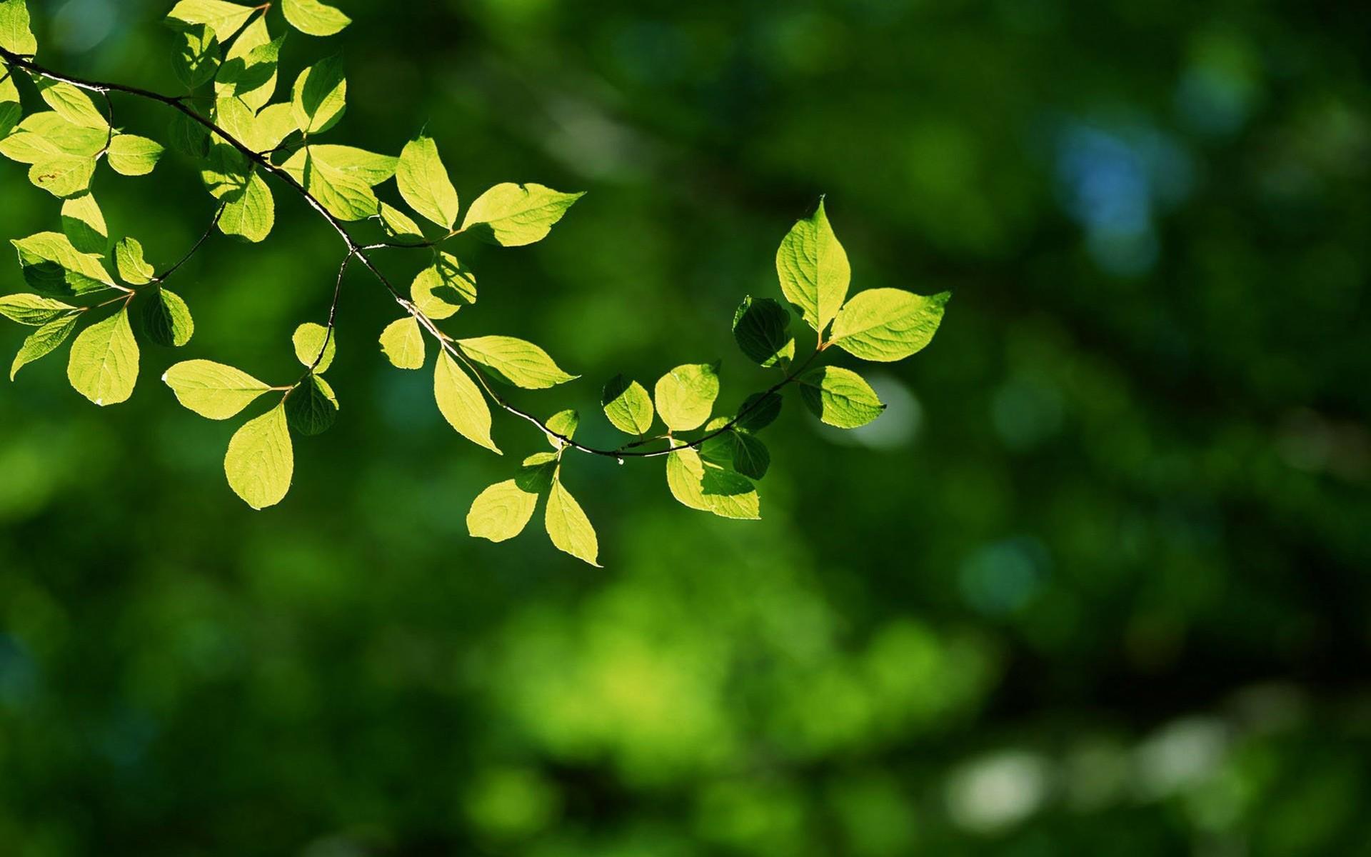 таком картинки природа листочки воодушевляя