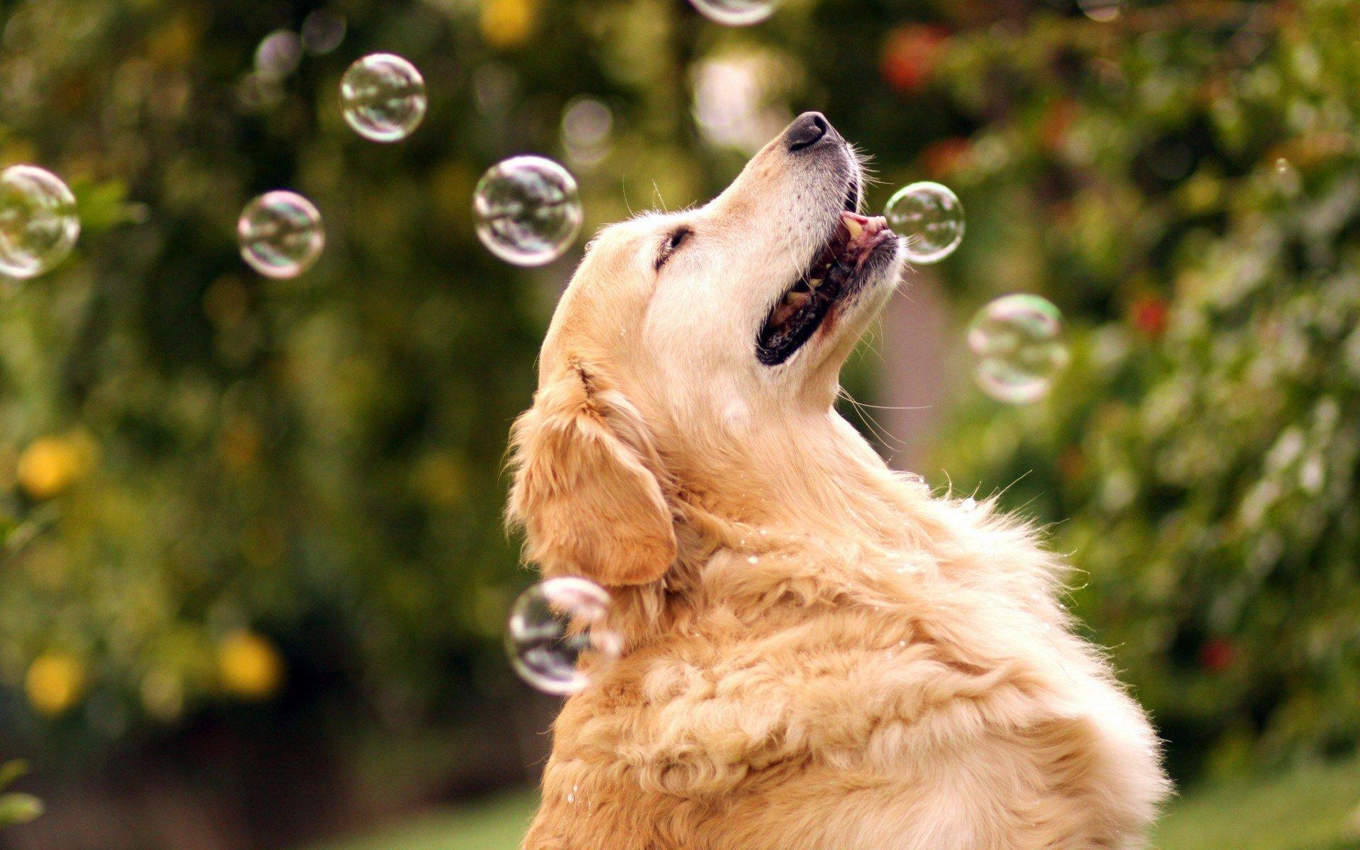 найти позитивные фото и картинки животных данном