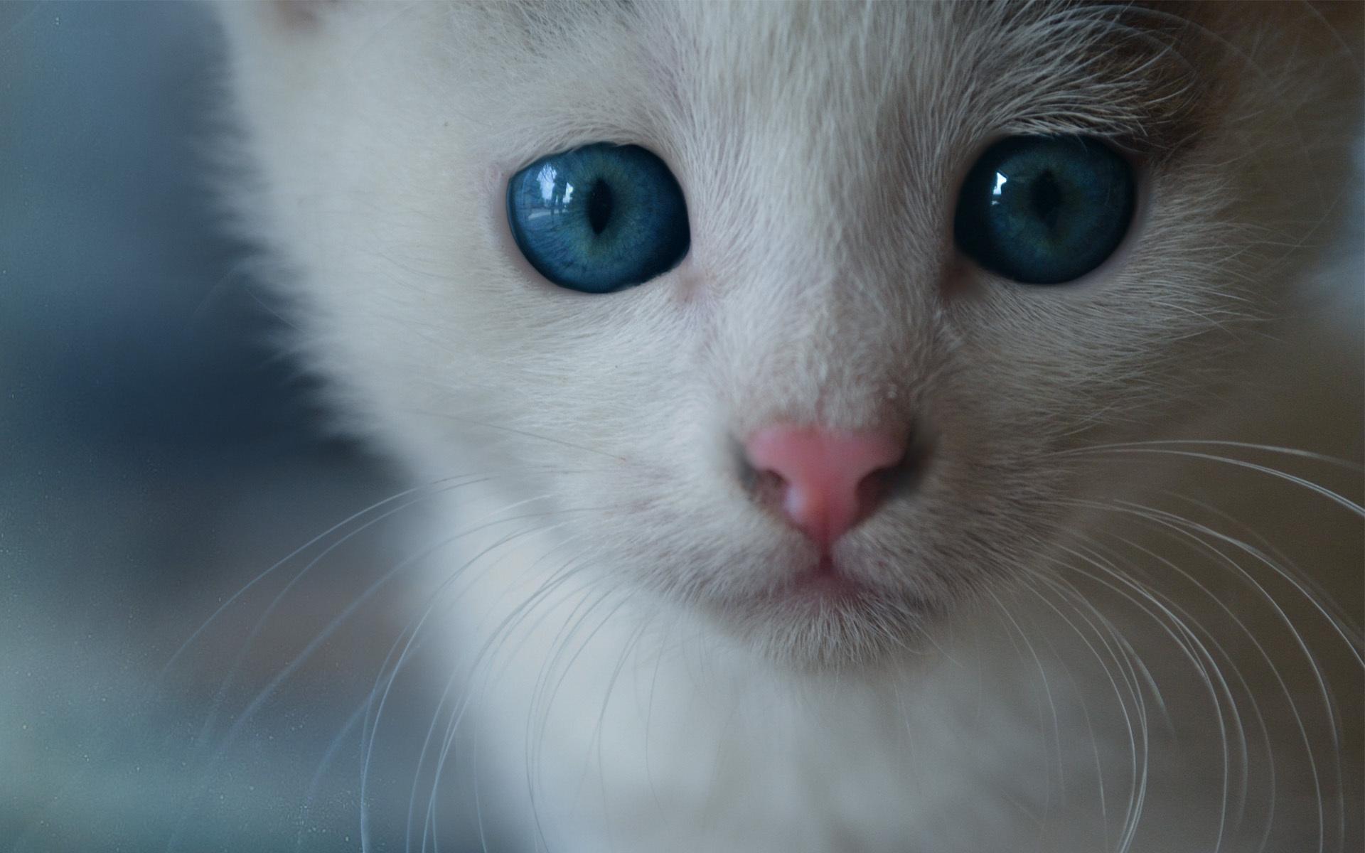 чем картинка про кота с глазами прошлом году начались