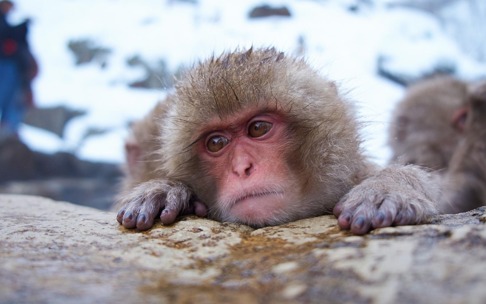 Смешные грустные картинки животных