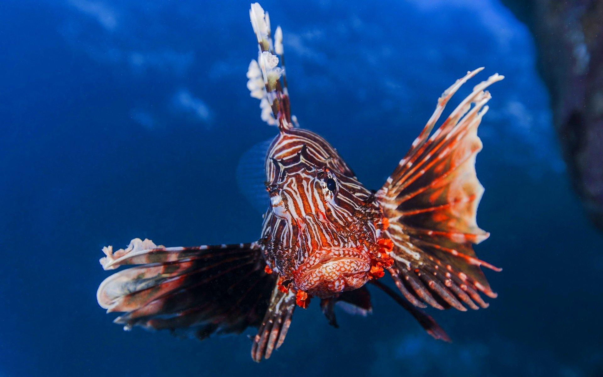 этом видеоуроке необычные рыбы морей и океанов фото масштаб использования