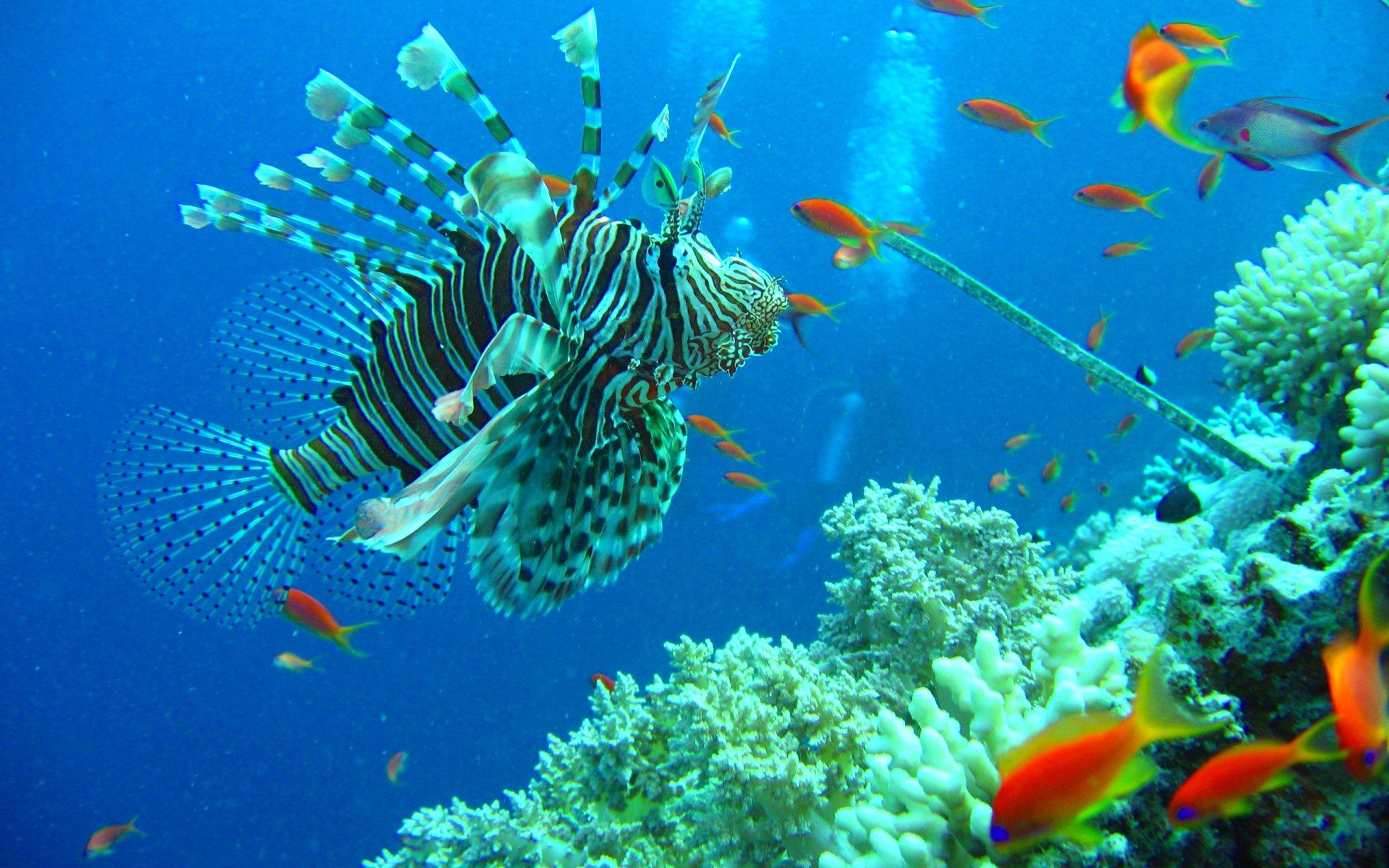 печальные последствия фото новые подводного мира настоятельно рекомендуют немного