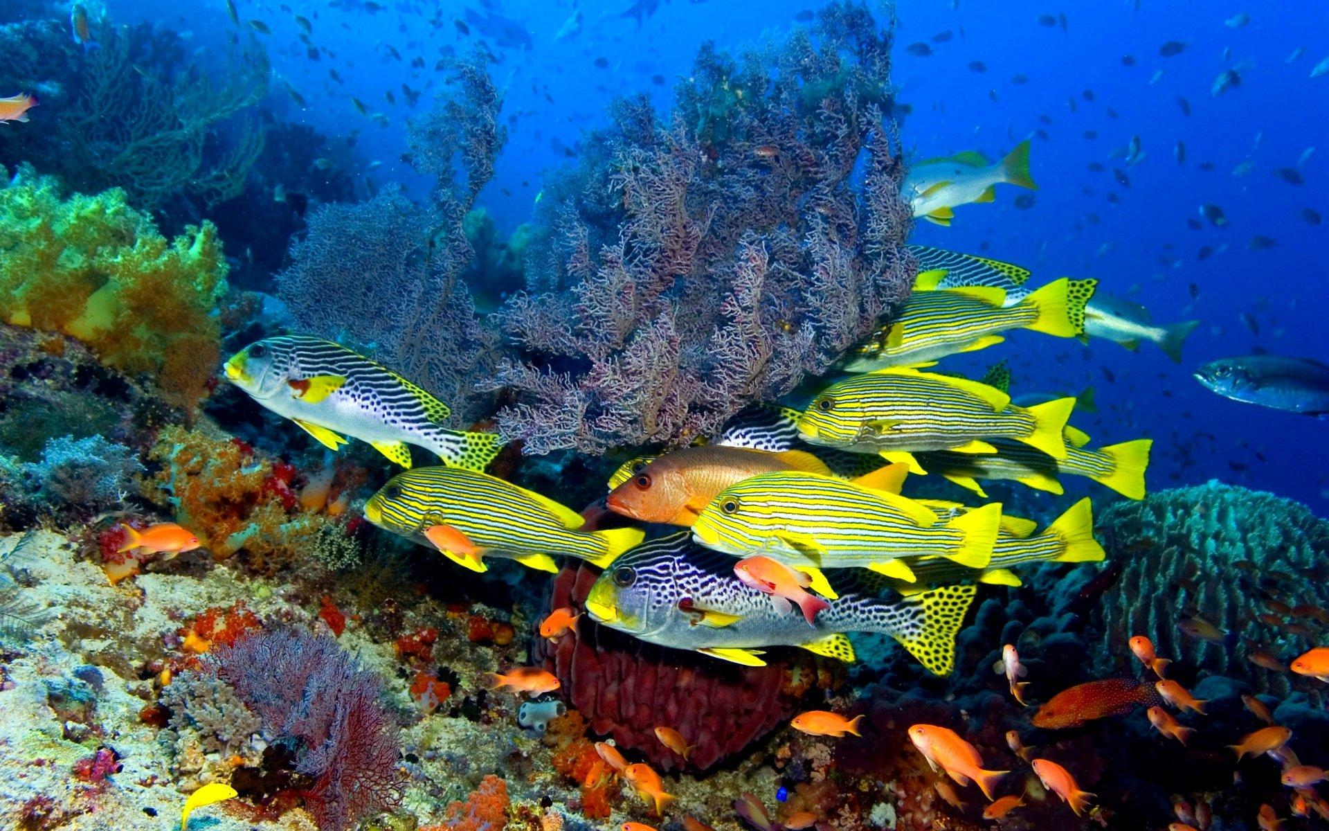 комментарии подписчиков картинки море с рыбами поздравления форме стиха