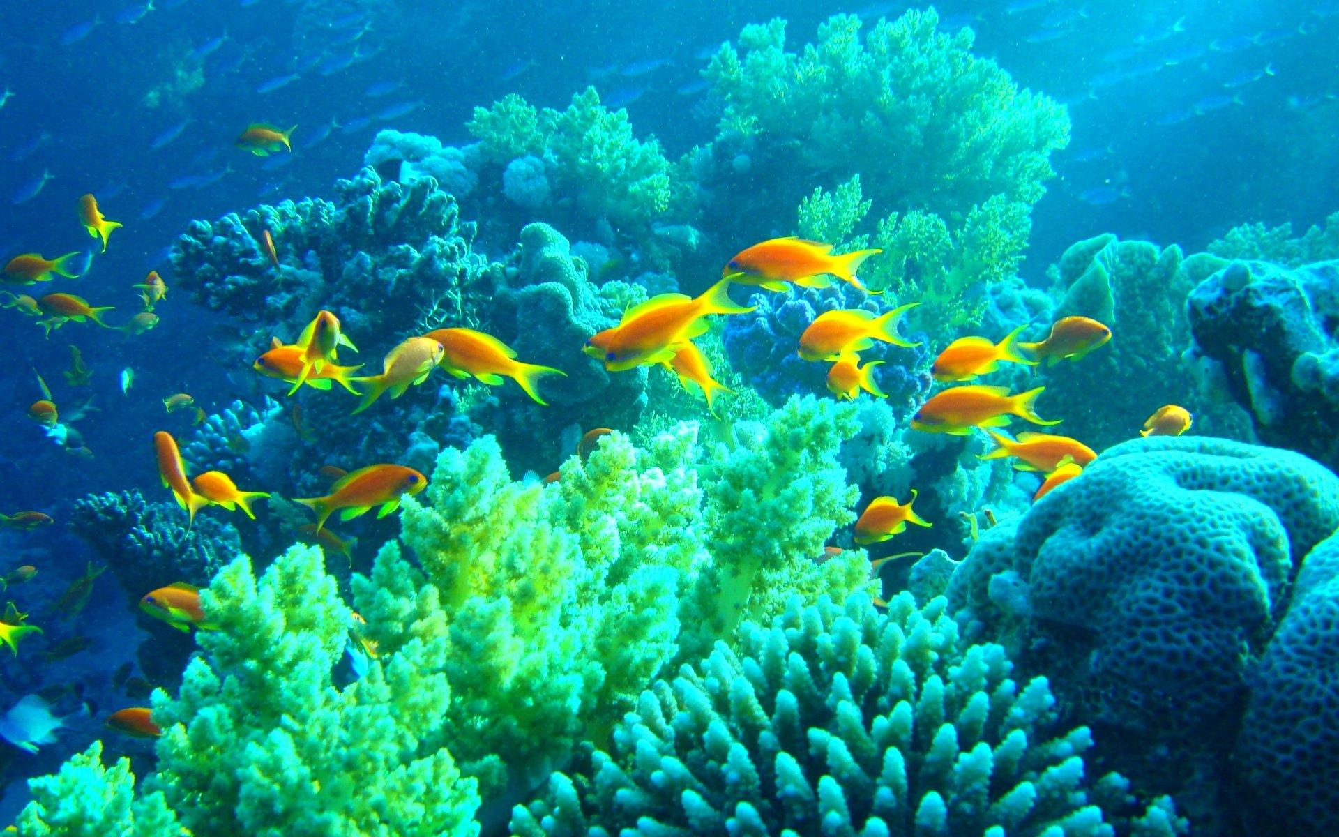 картинки дна океана с рыбками новогодней
