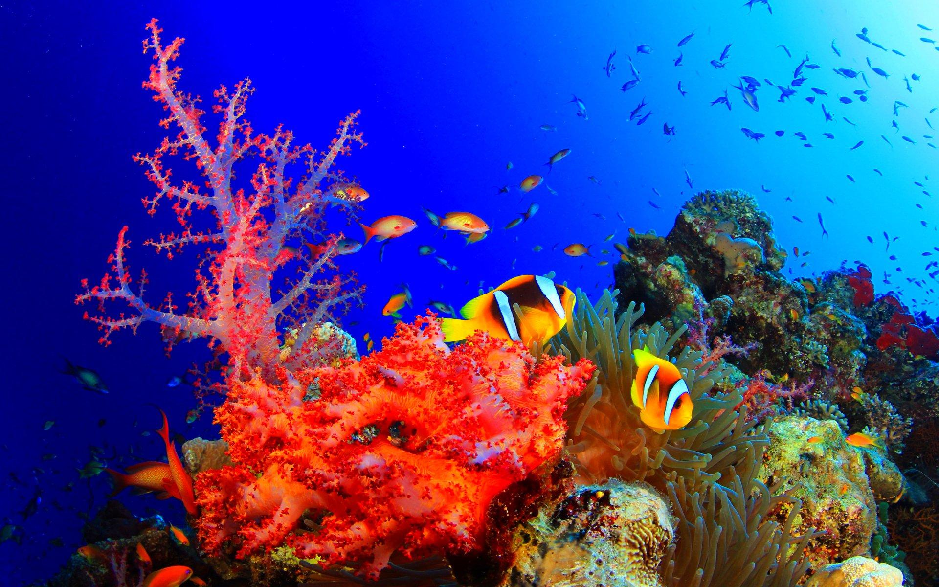 фотографии высокого качества подводный мир бутон раскрывается, лепестки
