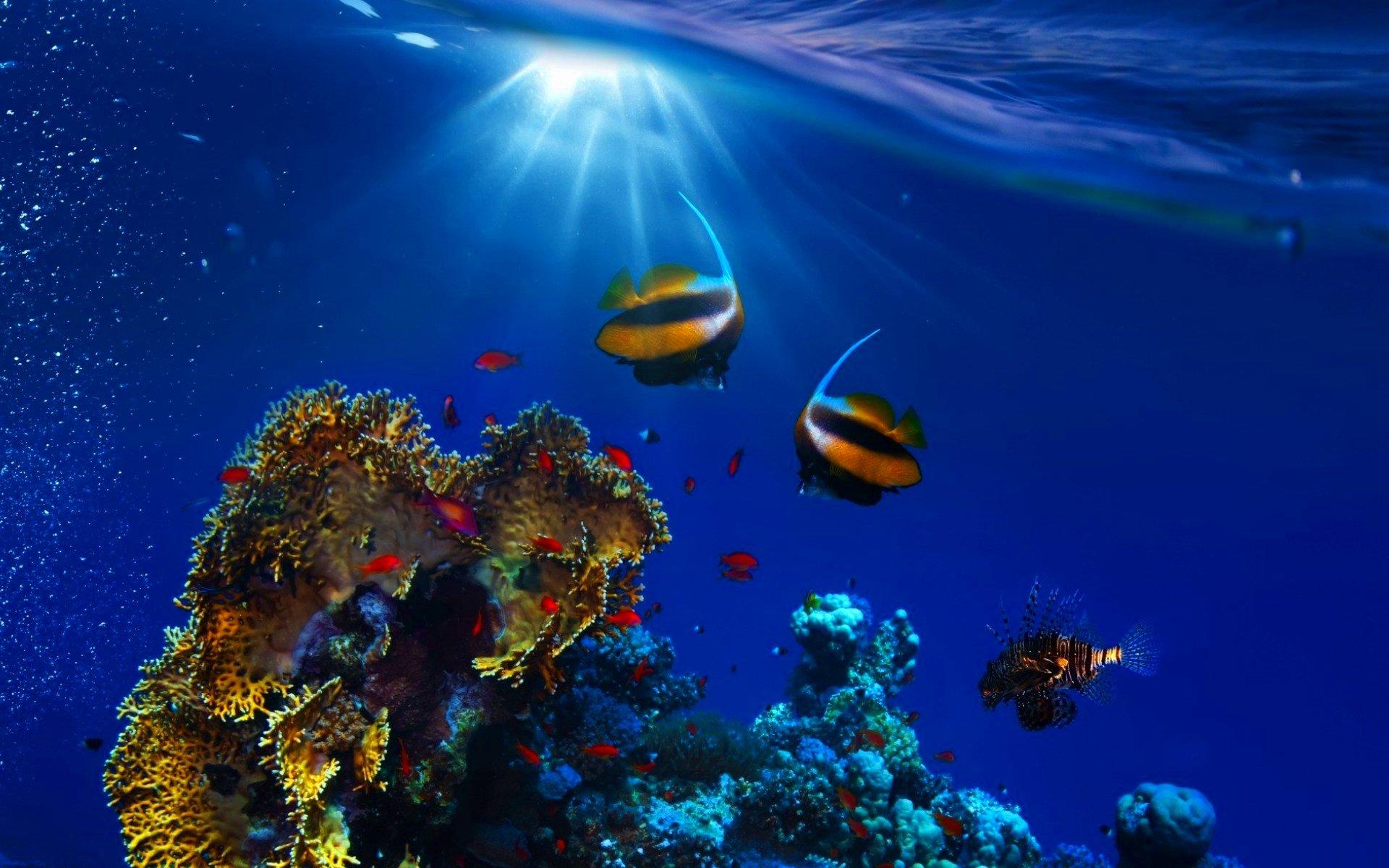 красивые фото море и рыбы в высоком разрешении достались ему его