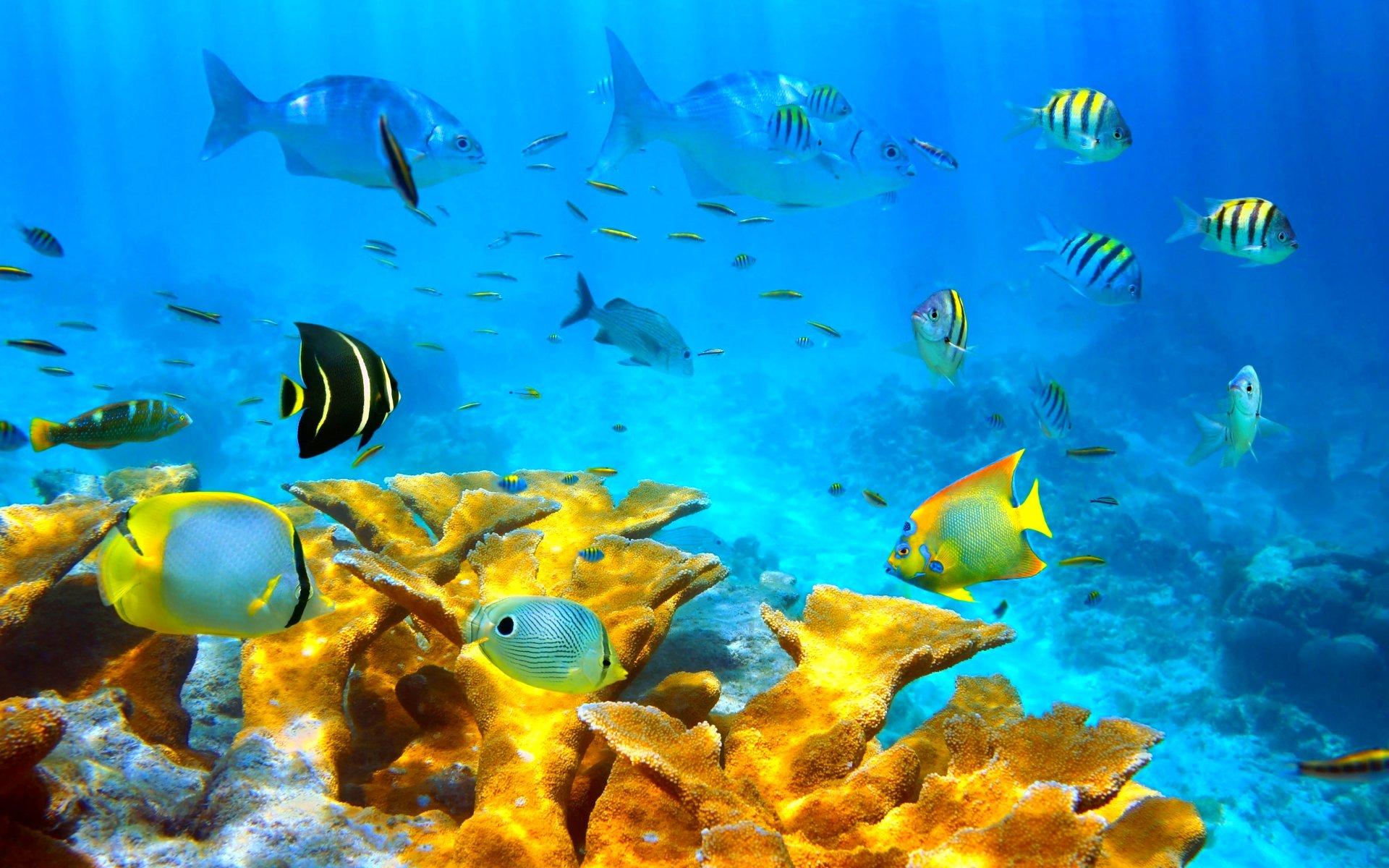 Fisch Und Meer Kiel