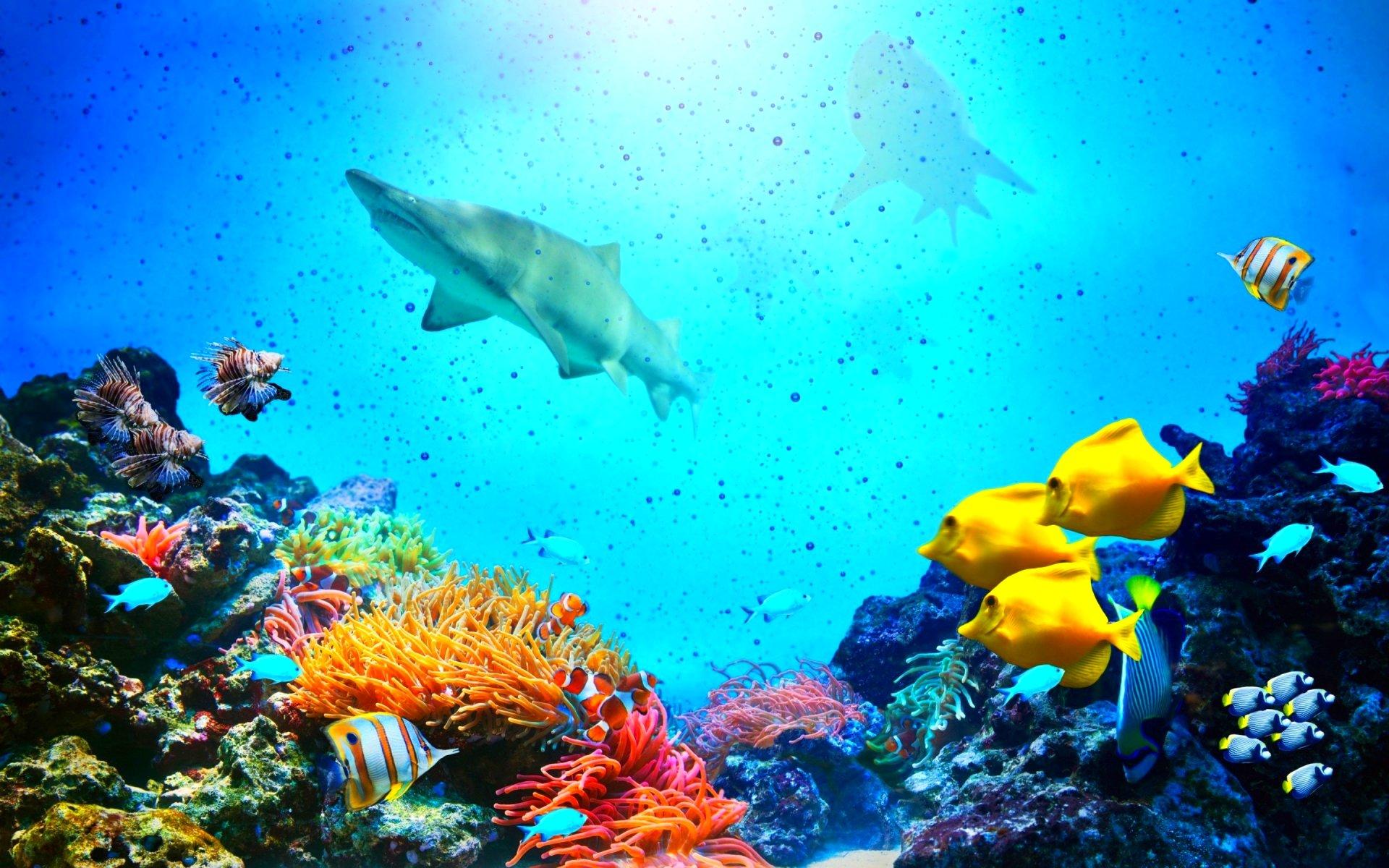 картинки дна океана с рыбками этом мифе было