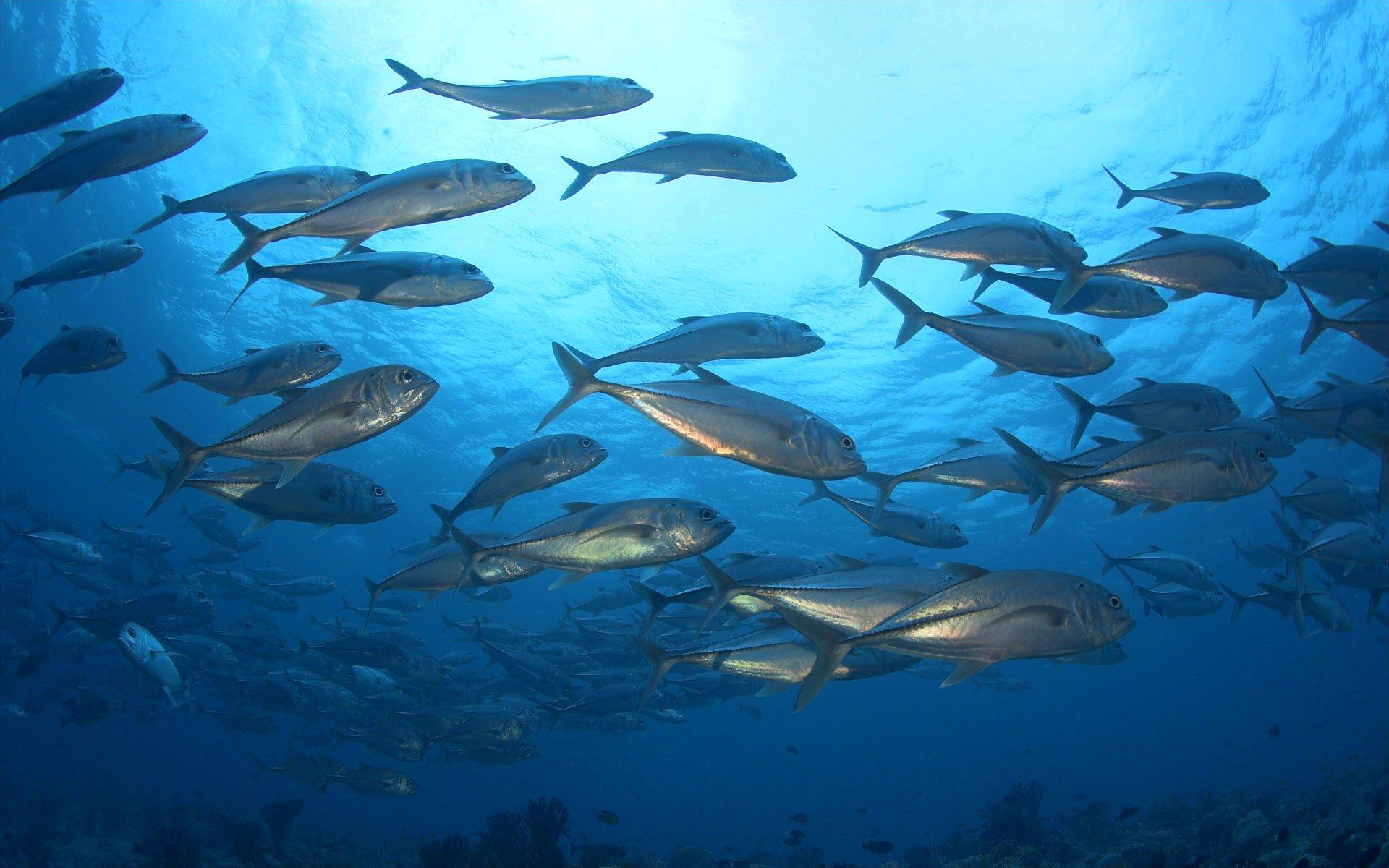 украинская картинка рыбы плавают в воде этому