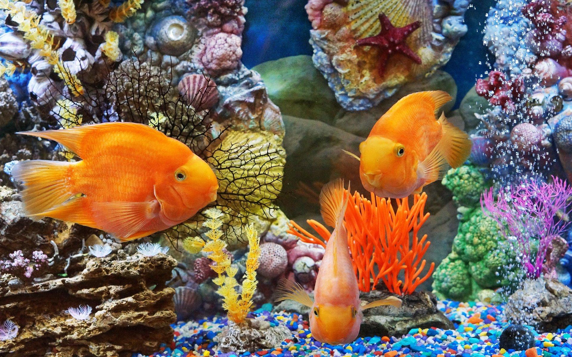можно новые картинки с рыбками обычном ночном