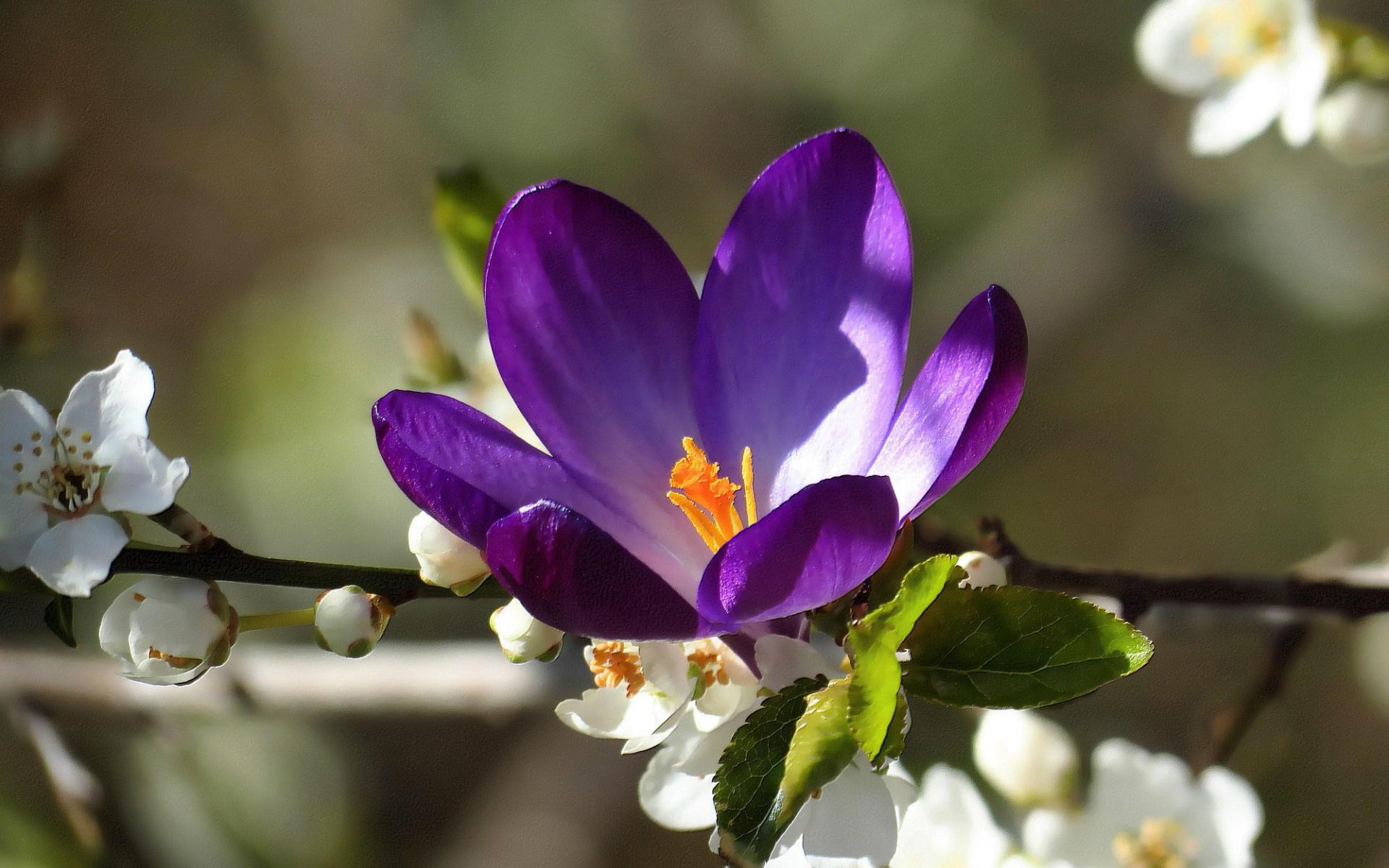 Foto Fiori Viola.Sfondi 1920x1200 Px Macro Natura Piante Fiori Viola Fiori