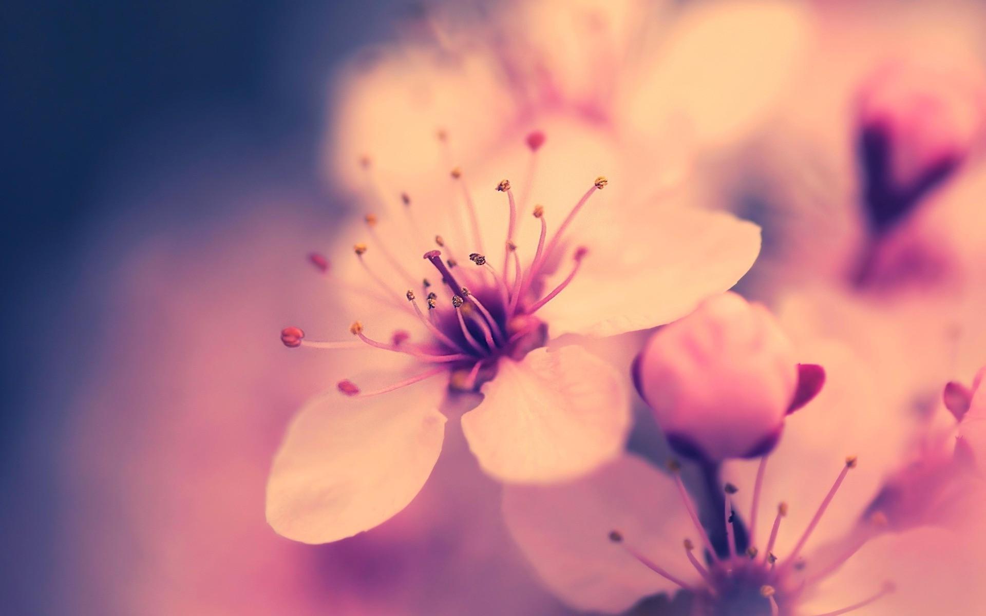 Картинки для обоев на рабочий стол цветы