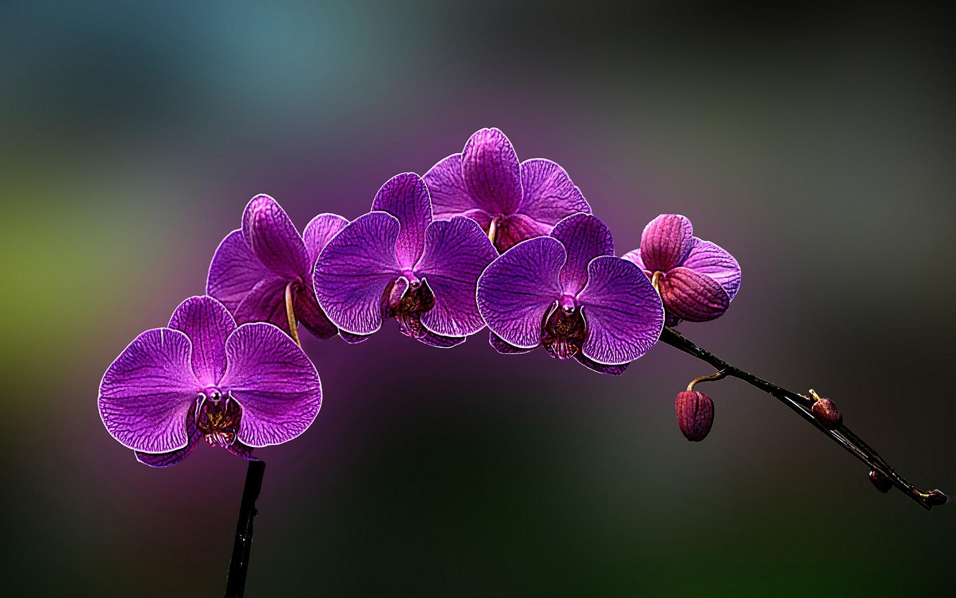 Красивые обои на рабочий стол 3d скачать бесплатно орхидеи