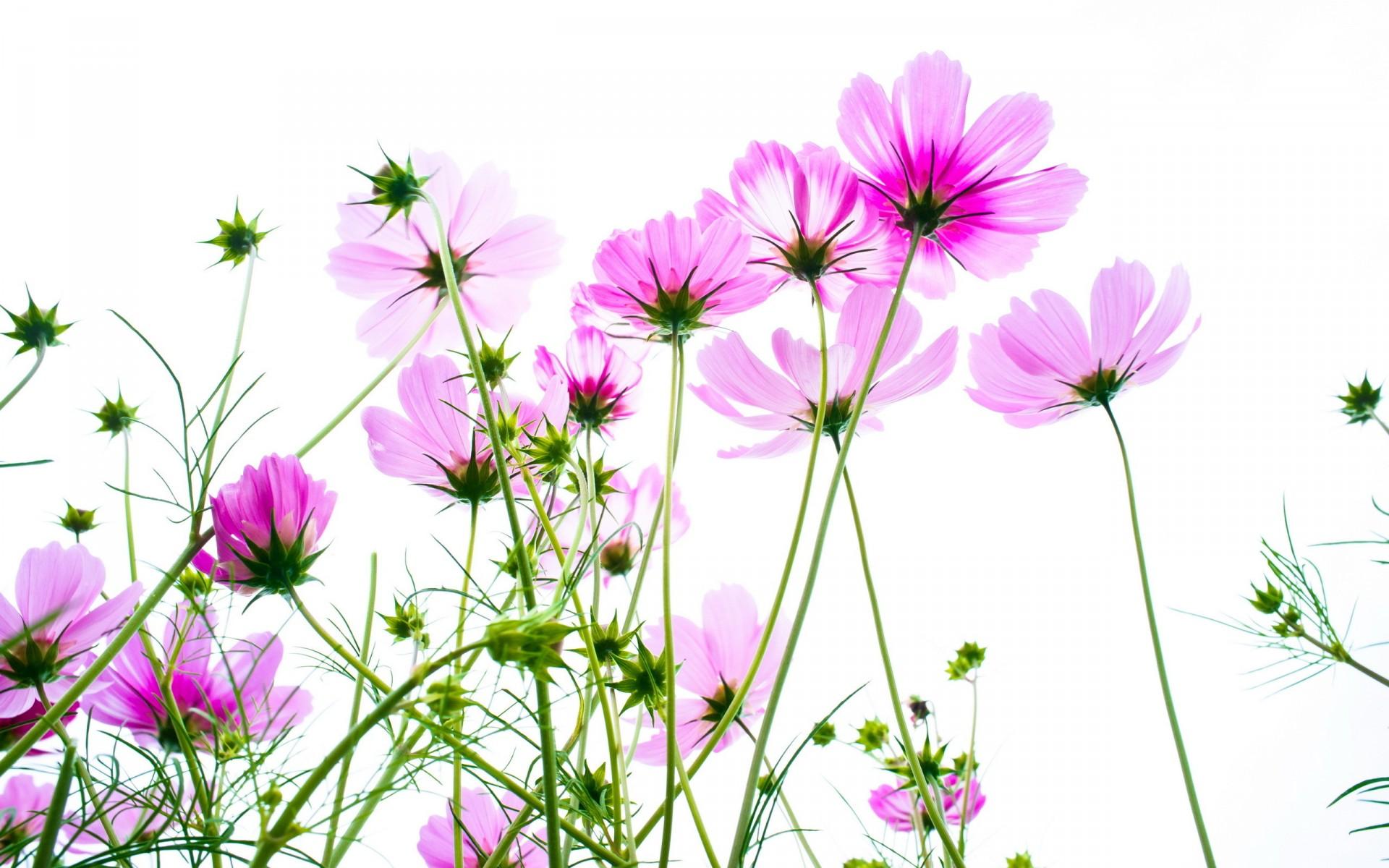 мягким картинка полевые цветы на прозрачном фоне установить