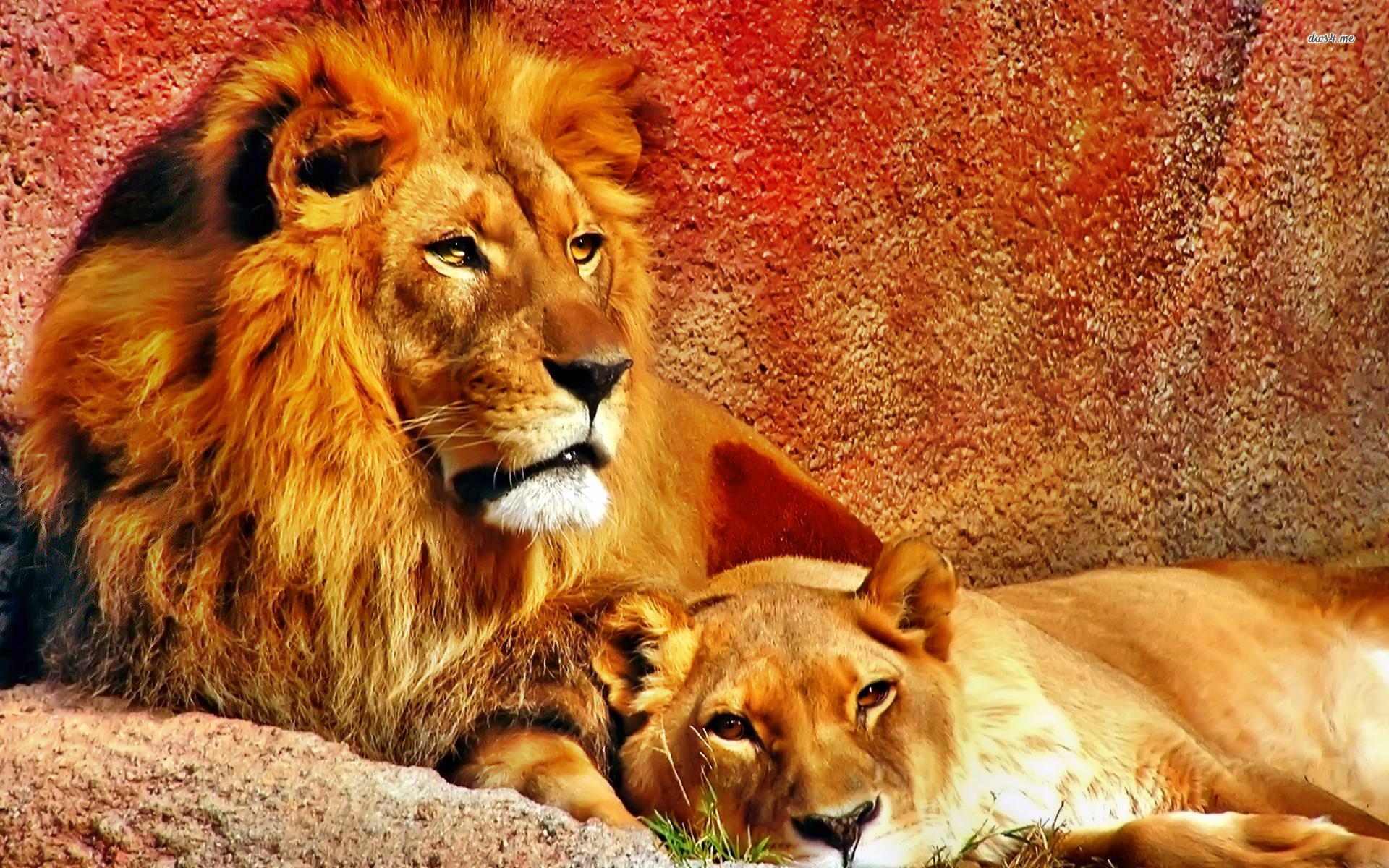 Картинки красивых животных для картинки