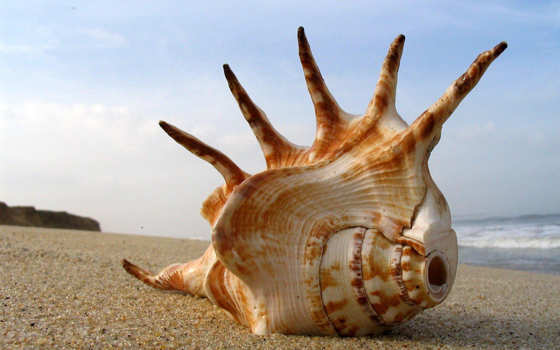 коньки это картинки прикол кто живет в океане эльфы