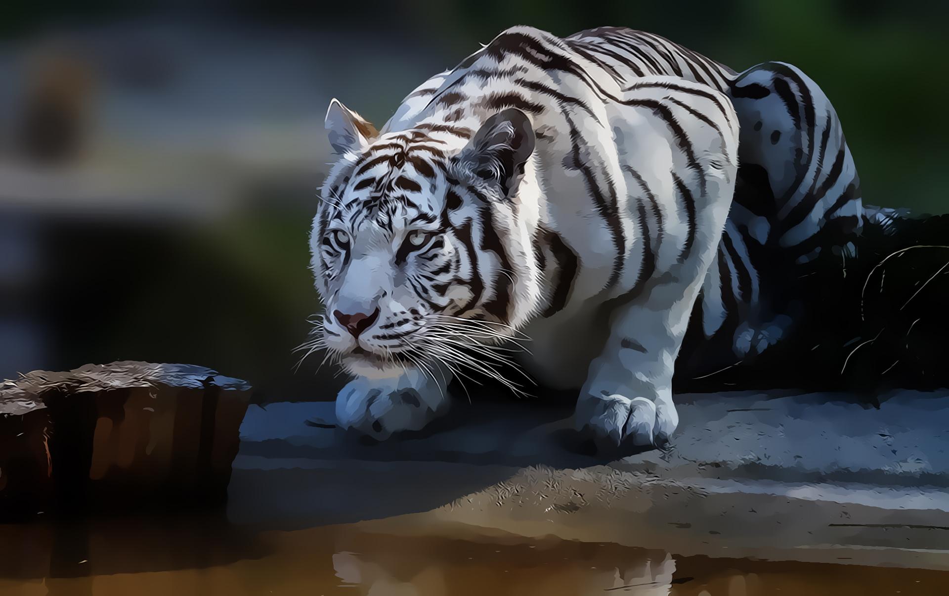 Papel De Parede 1920x1205 Px Veja Natureza Predador Tigre