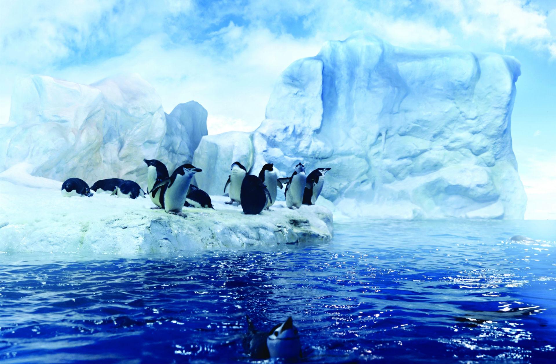 первую обои на рабочий стол пингвины на льдине туз фото