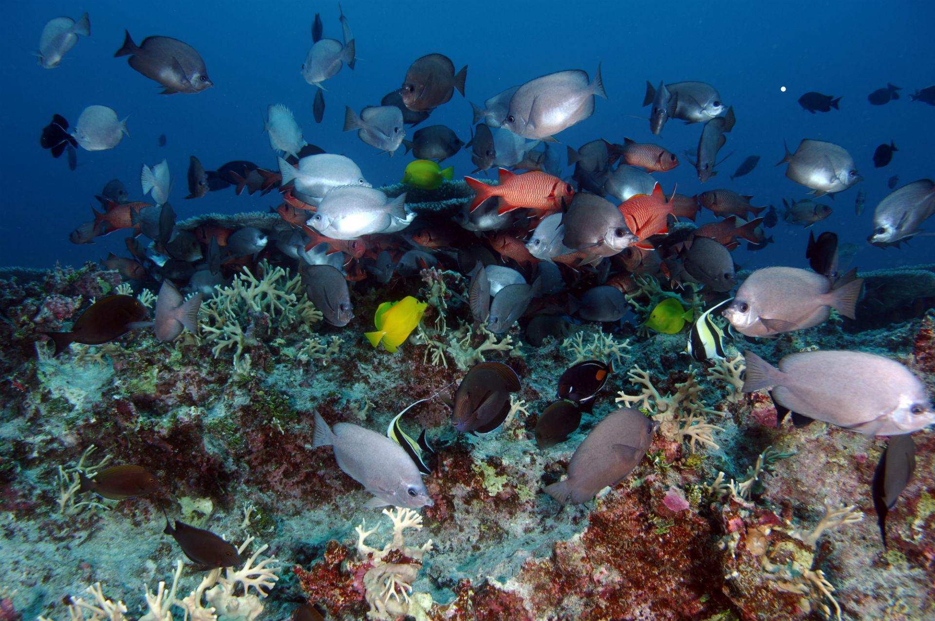 нагревании картинки жизнь в морях и океанах для
