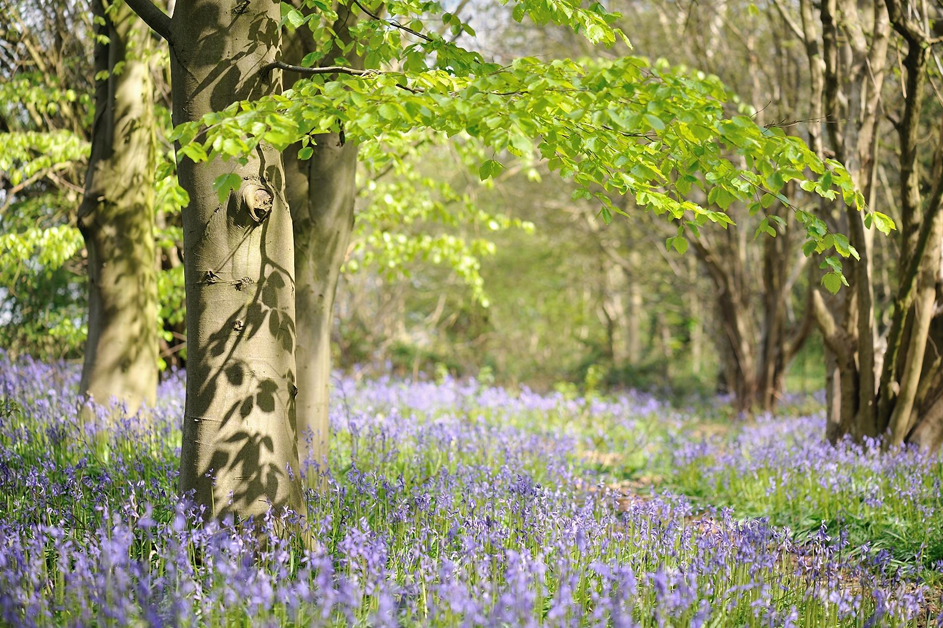Великолепная весна высокого качества фото